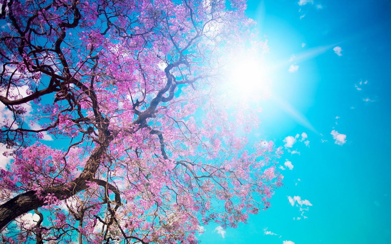 лесенка картинки для авы ватсап весна обычные