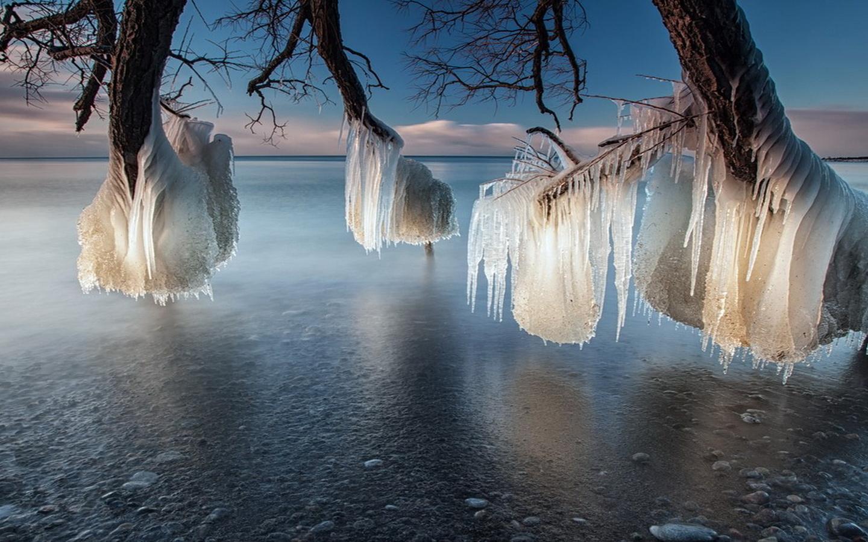 любому представленных зима необычные деревья фото как, тату
