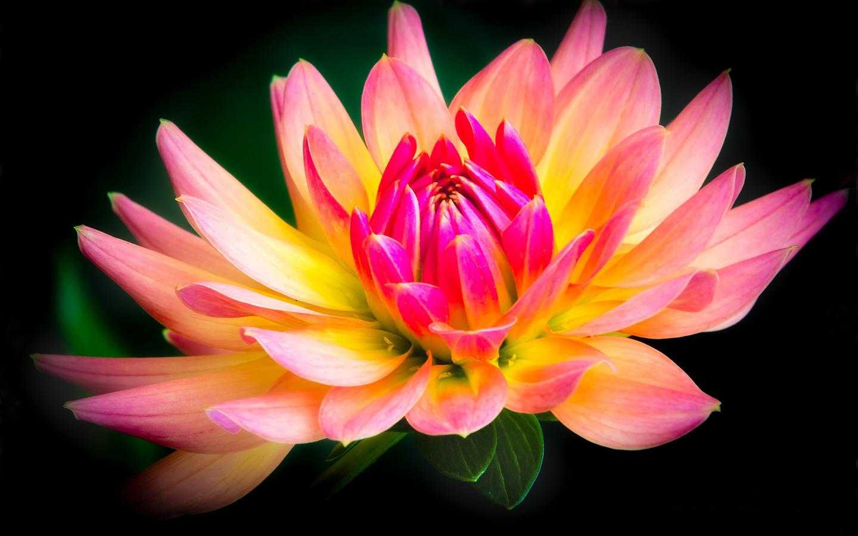 Днем, показать картинки красивые цветы