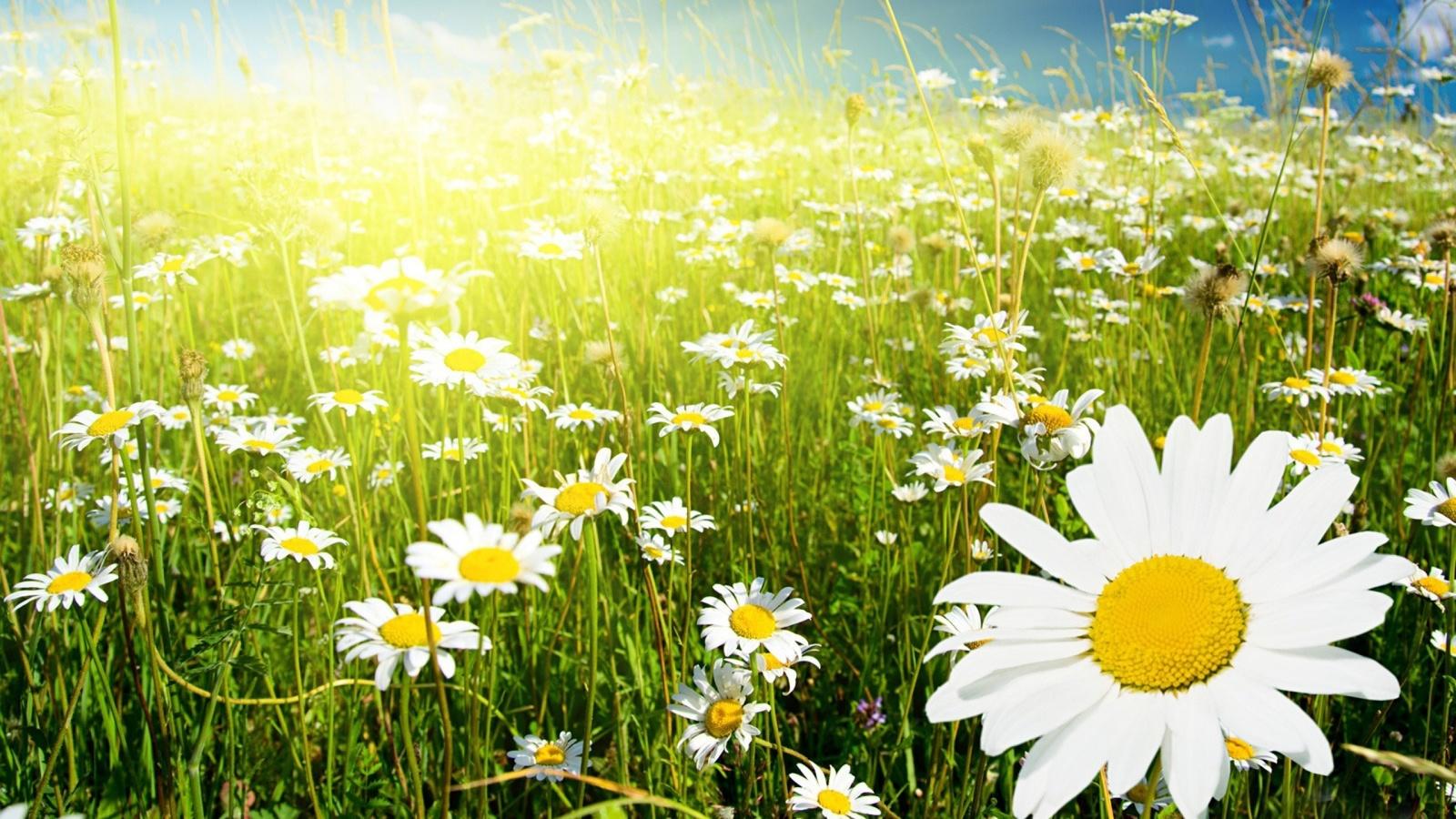 картинка которая напоминает лето картина букет лилий
