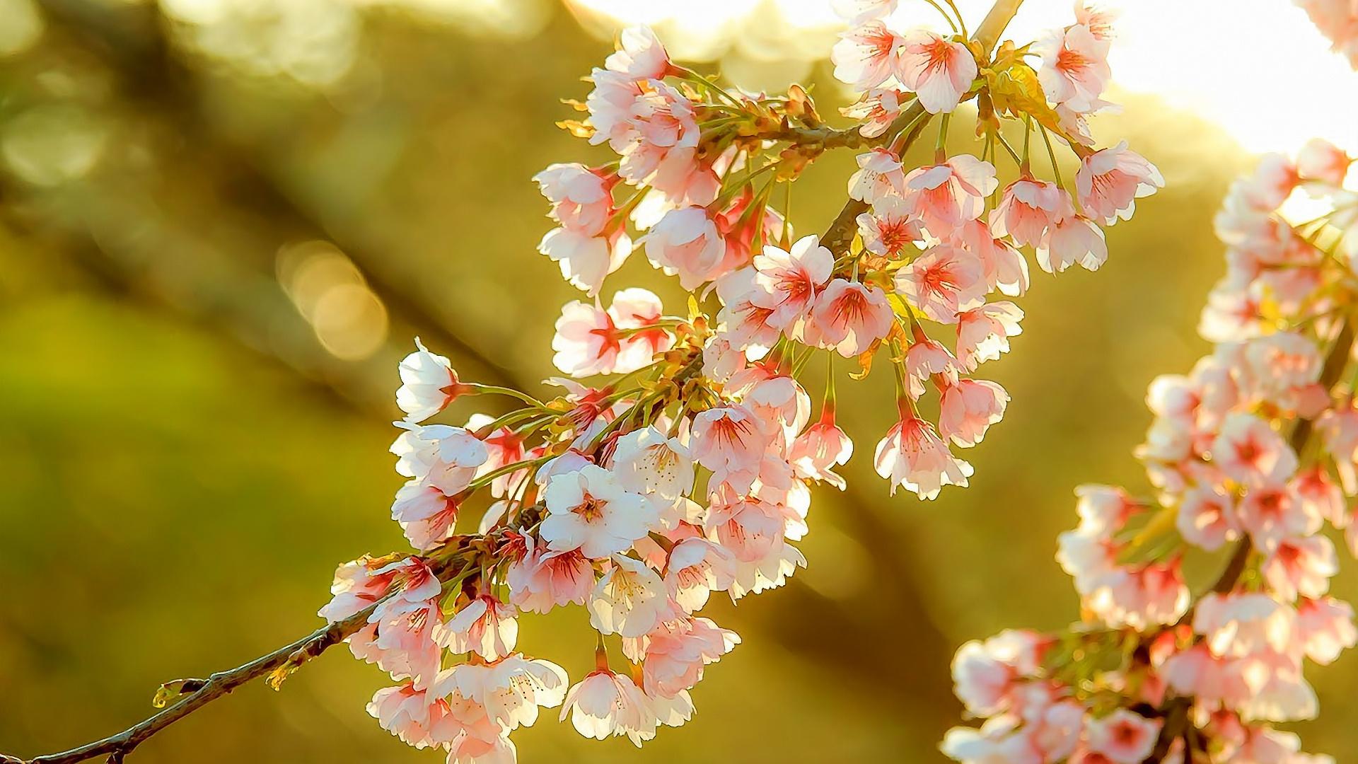 Красивая открытка природы солнце весна