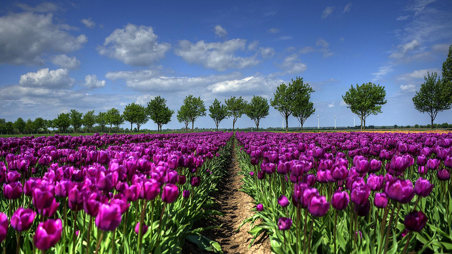 Нидерланды картинки природы