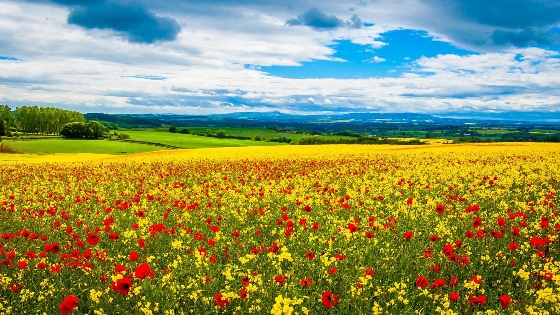 Картинки лето панорама