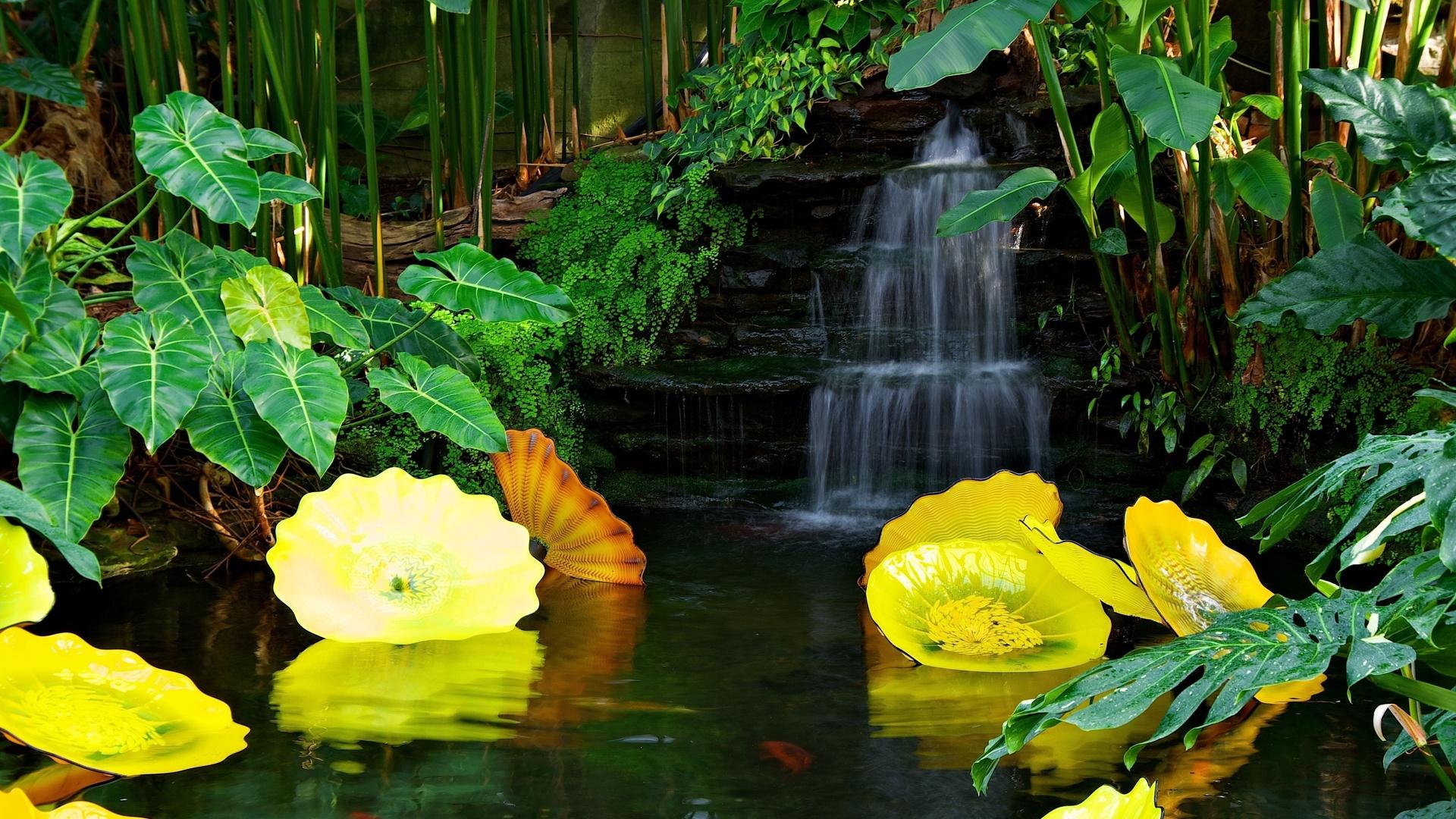 Картинки индюшки, цветы в воде картинки