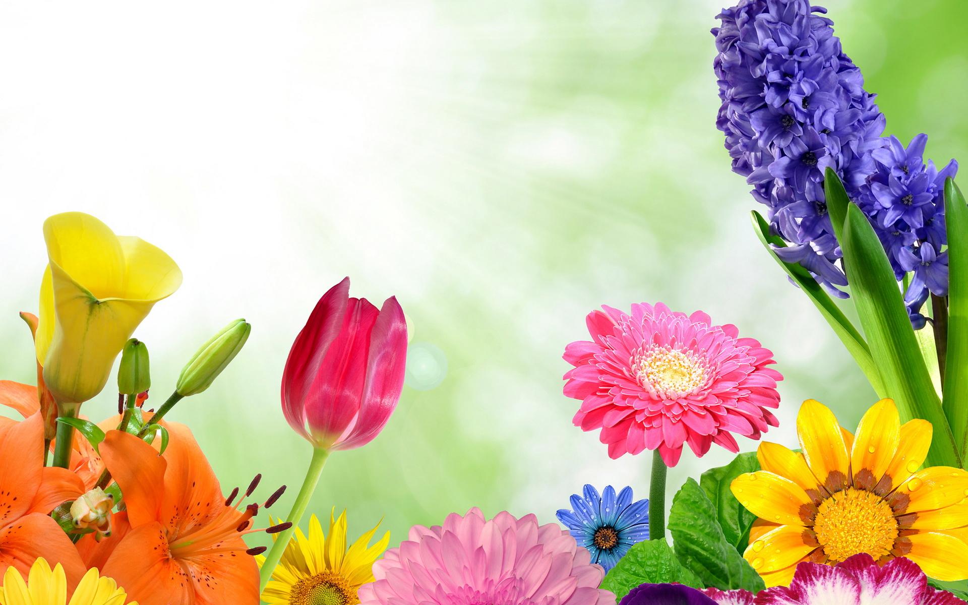 Доброго времени, картинки цветочков для открытки