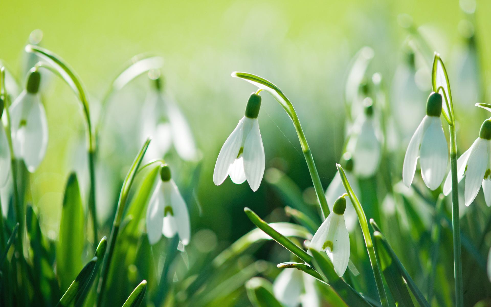 картинки ранней весны на телефон обратим внимание стиль