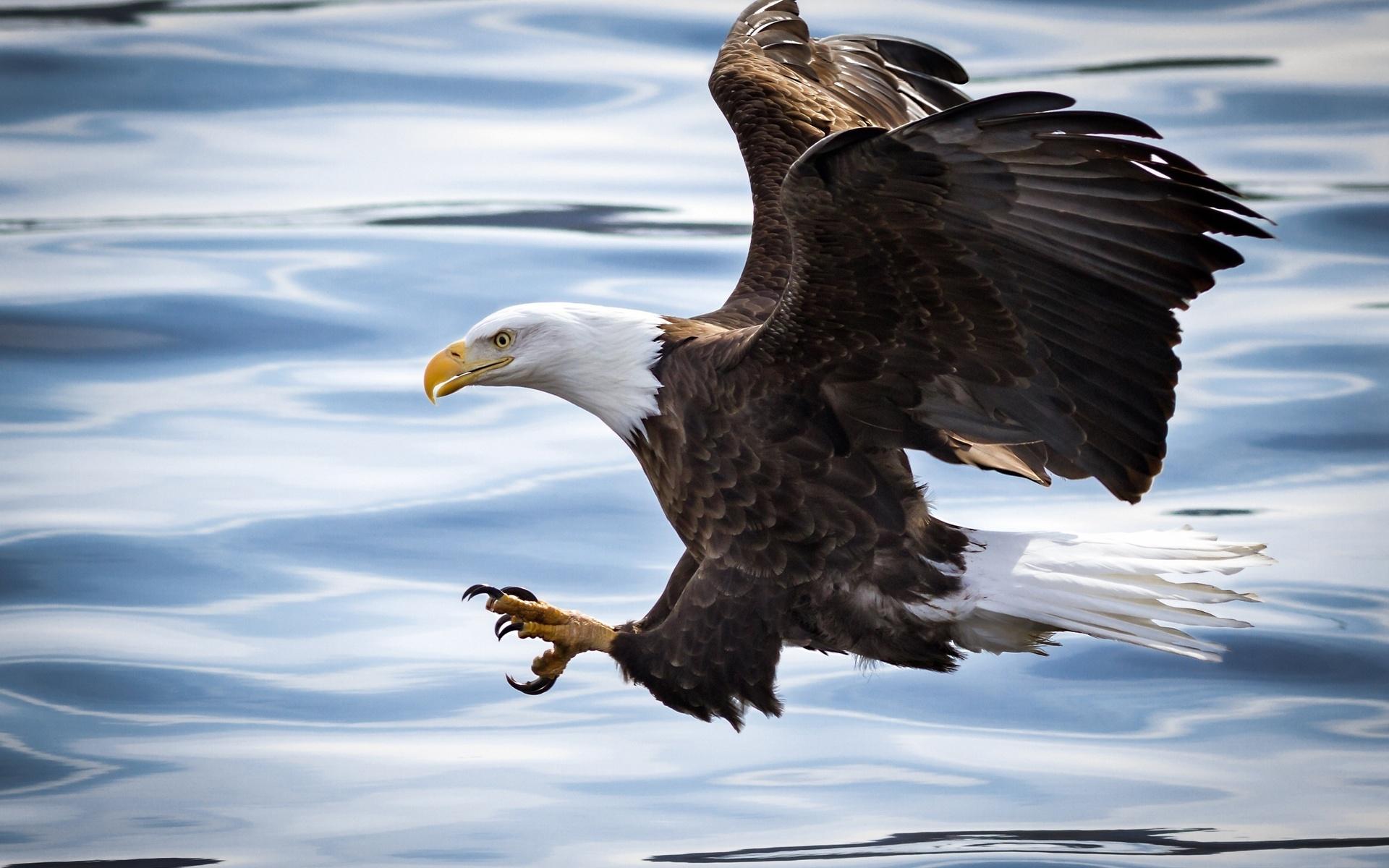 искусственного белоголовый орел открытка стоят