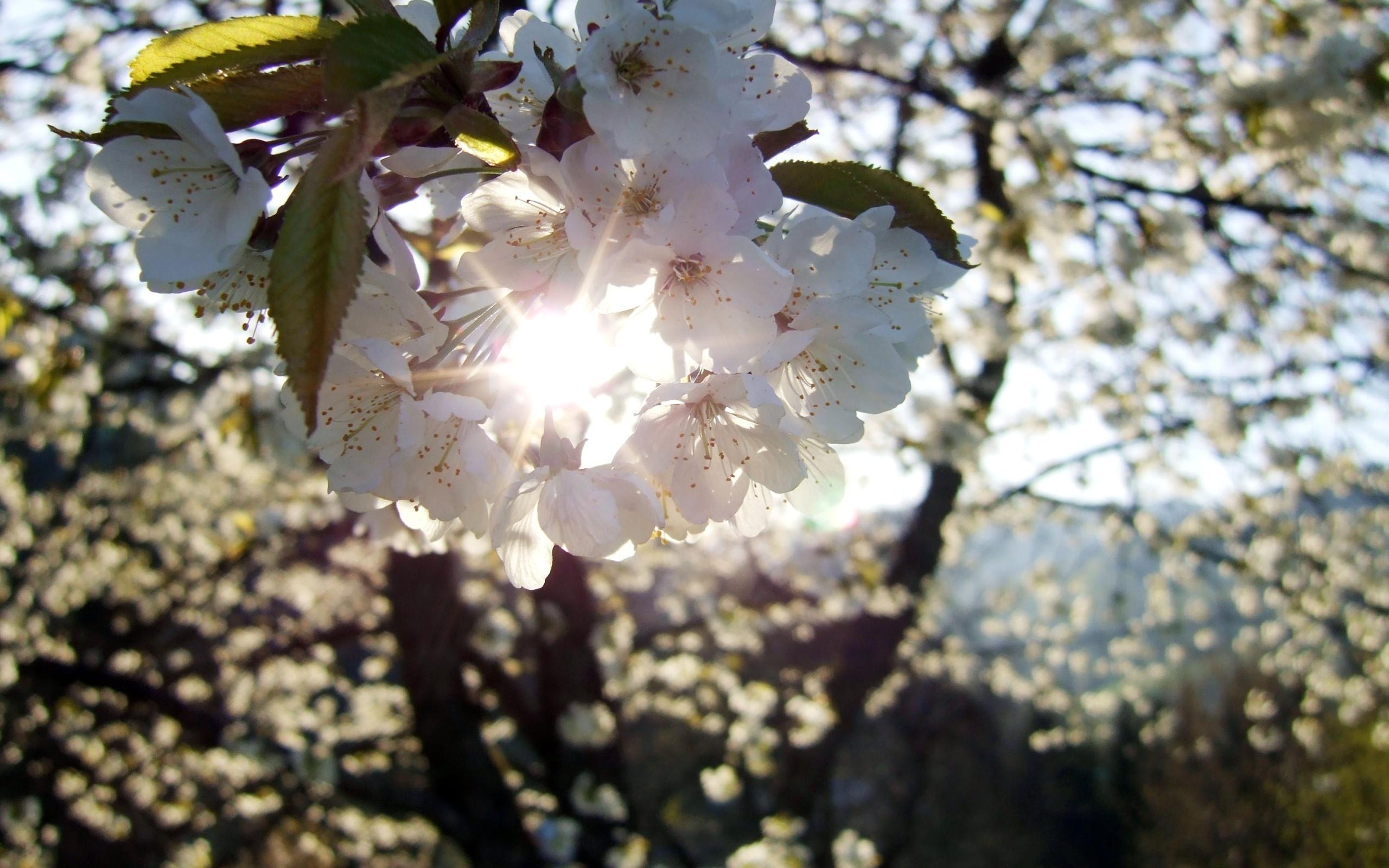 весна и солнце картинки