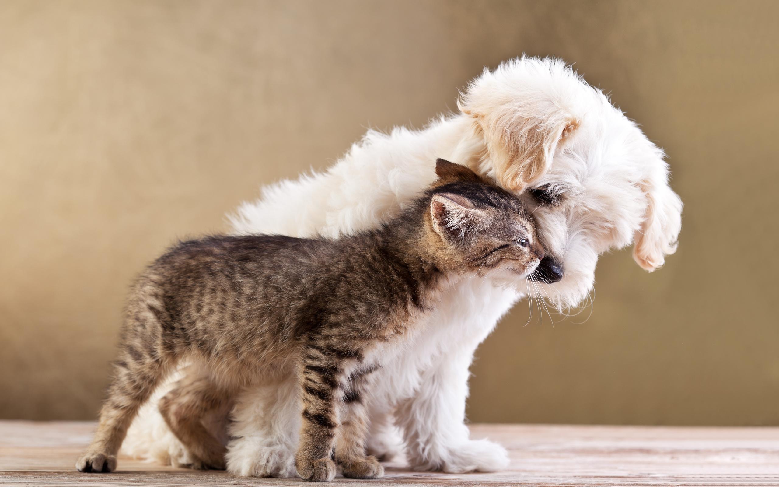 картинка друзья это кошка как раз