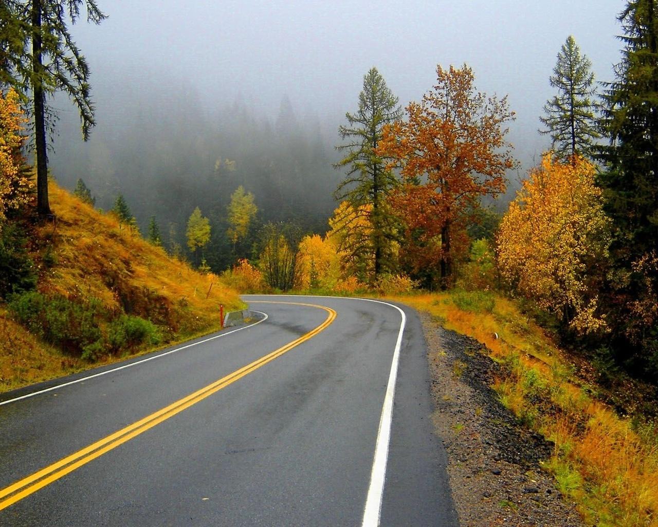 этом картинки повороты лесных дорог так