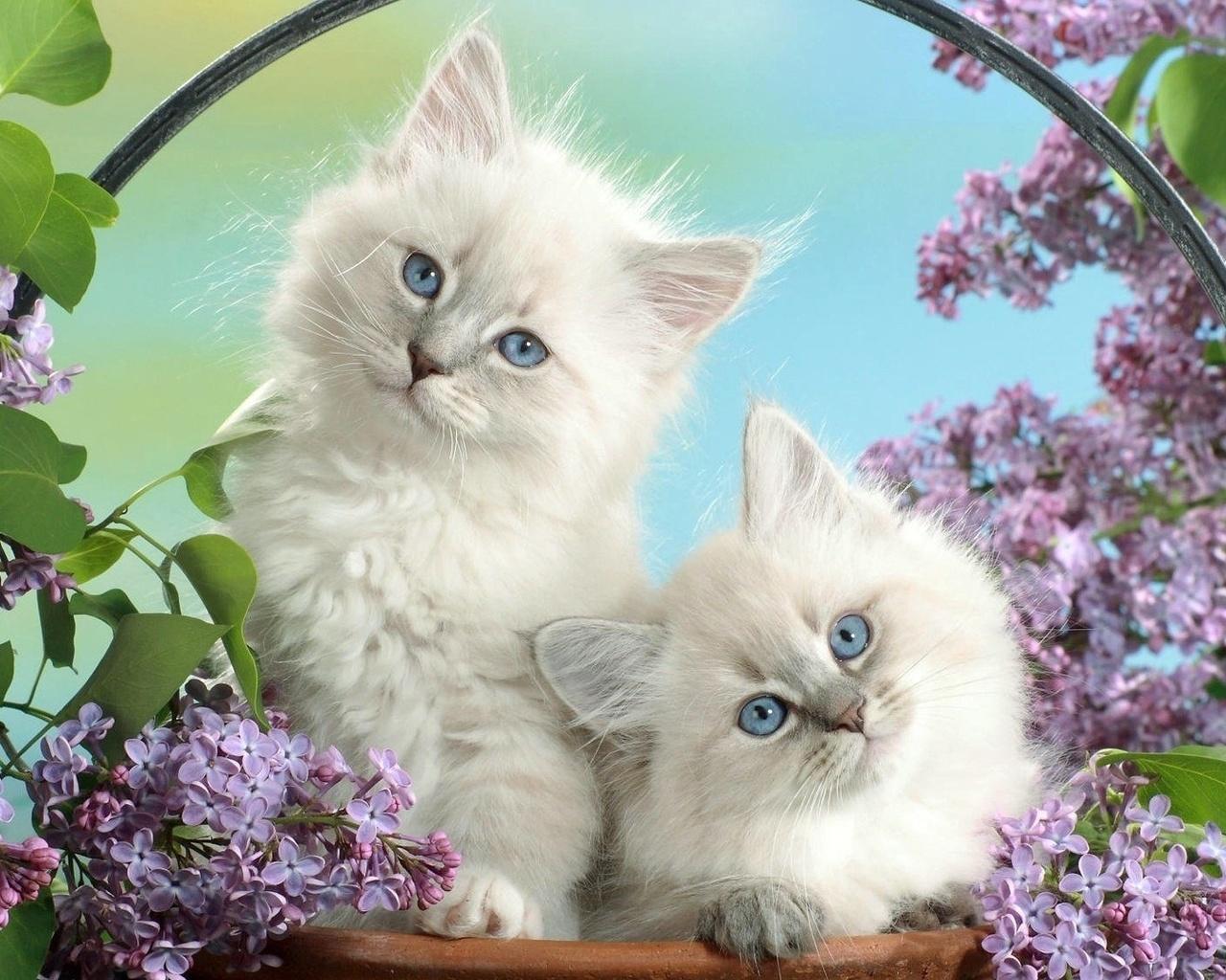 картинки на телефон движущиеся с котятами себе процесс создания