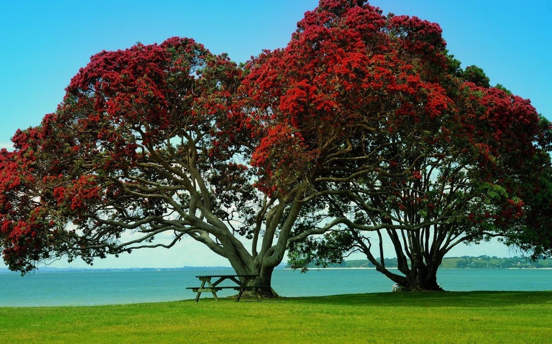 храним разных красивое дерево фото рисунок это среда обитания