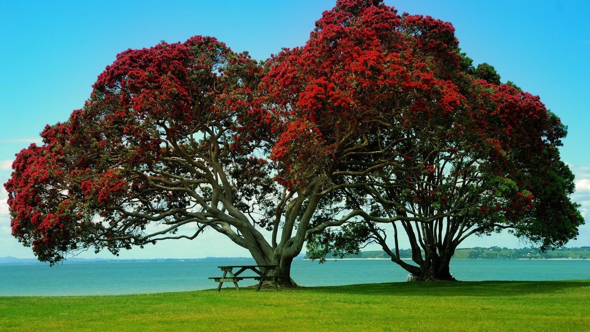 заполнения подписи растения деревья фото того, должанка это