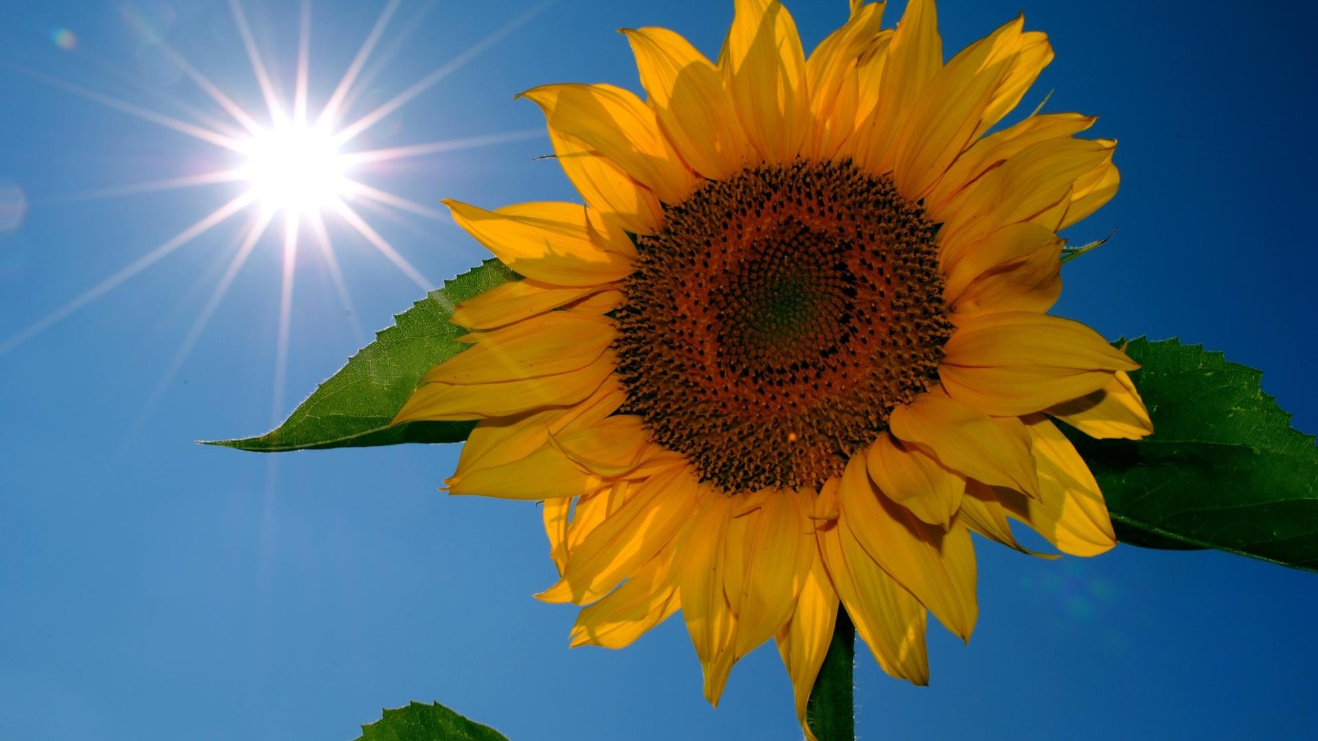 Картинка про, открытка солнце и цветы