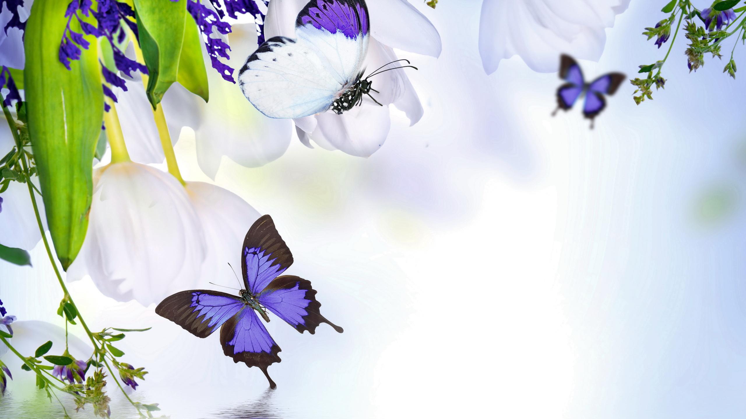 Для внучки, цветы и бабочки картинки