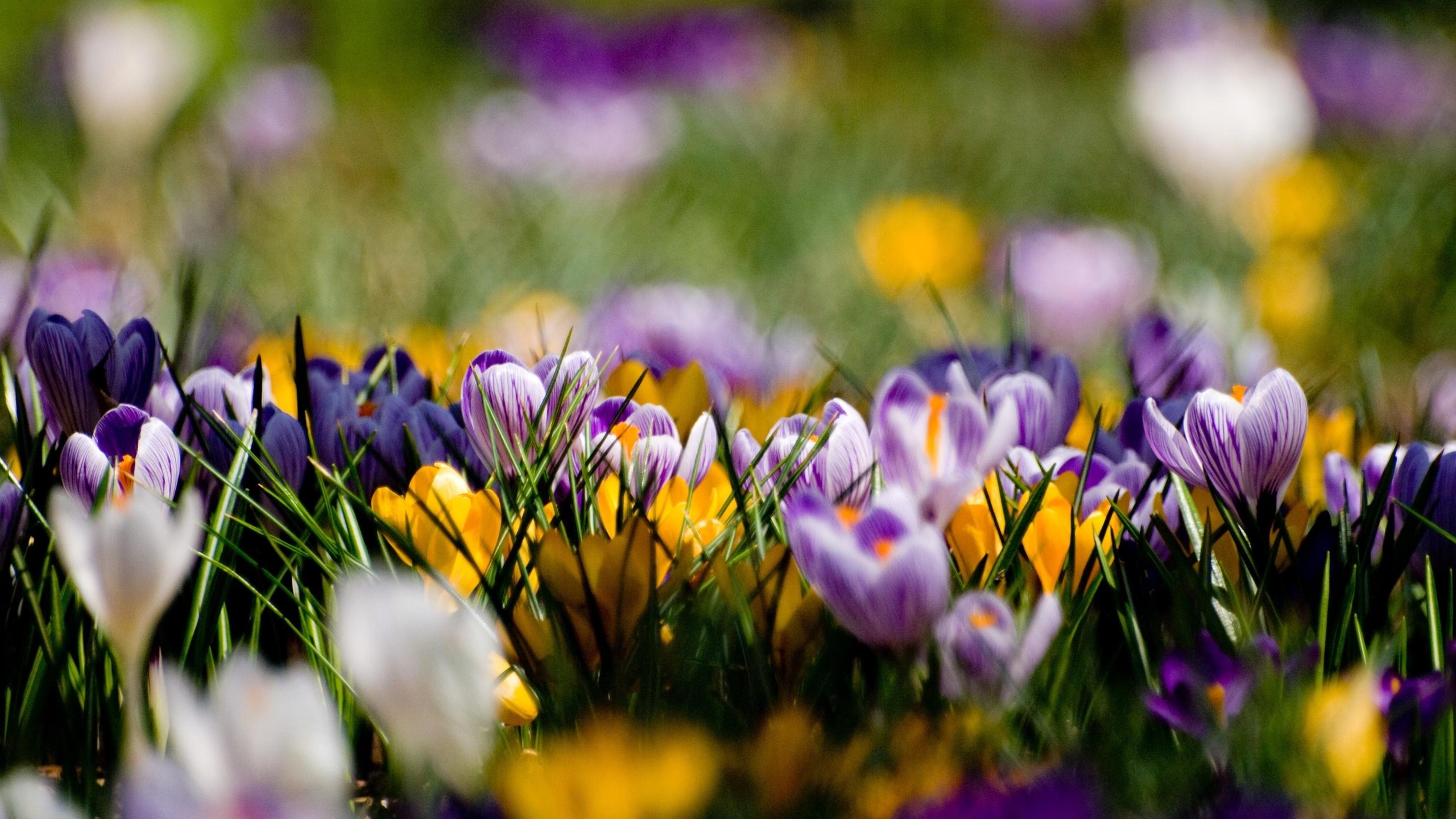 фото весна природа хорошего качества если