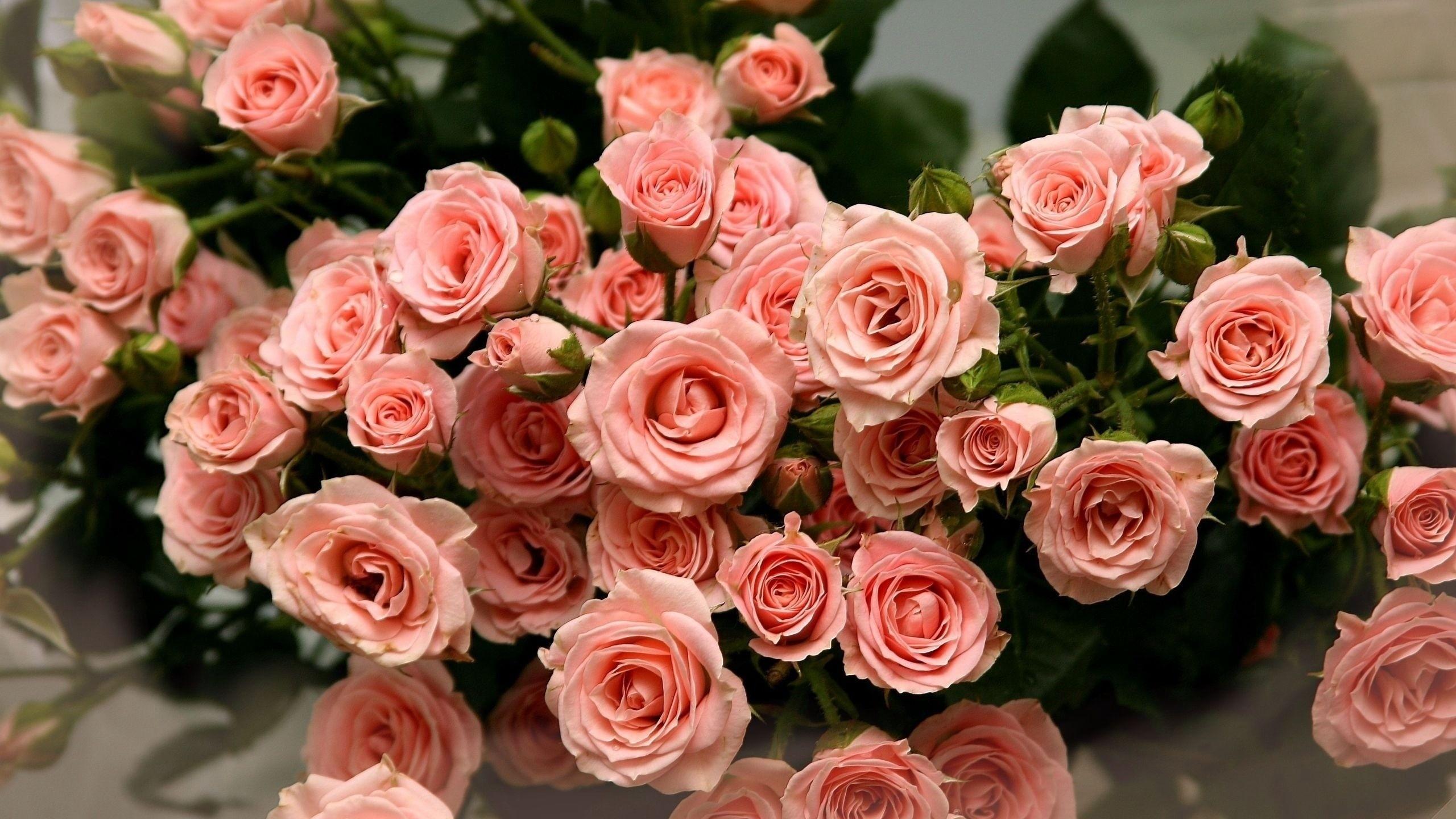 Картинки с розовыми цветами совсем недавно