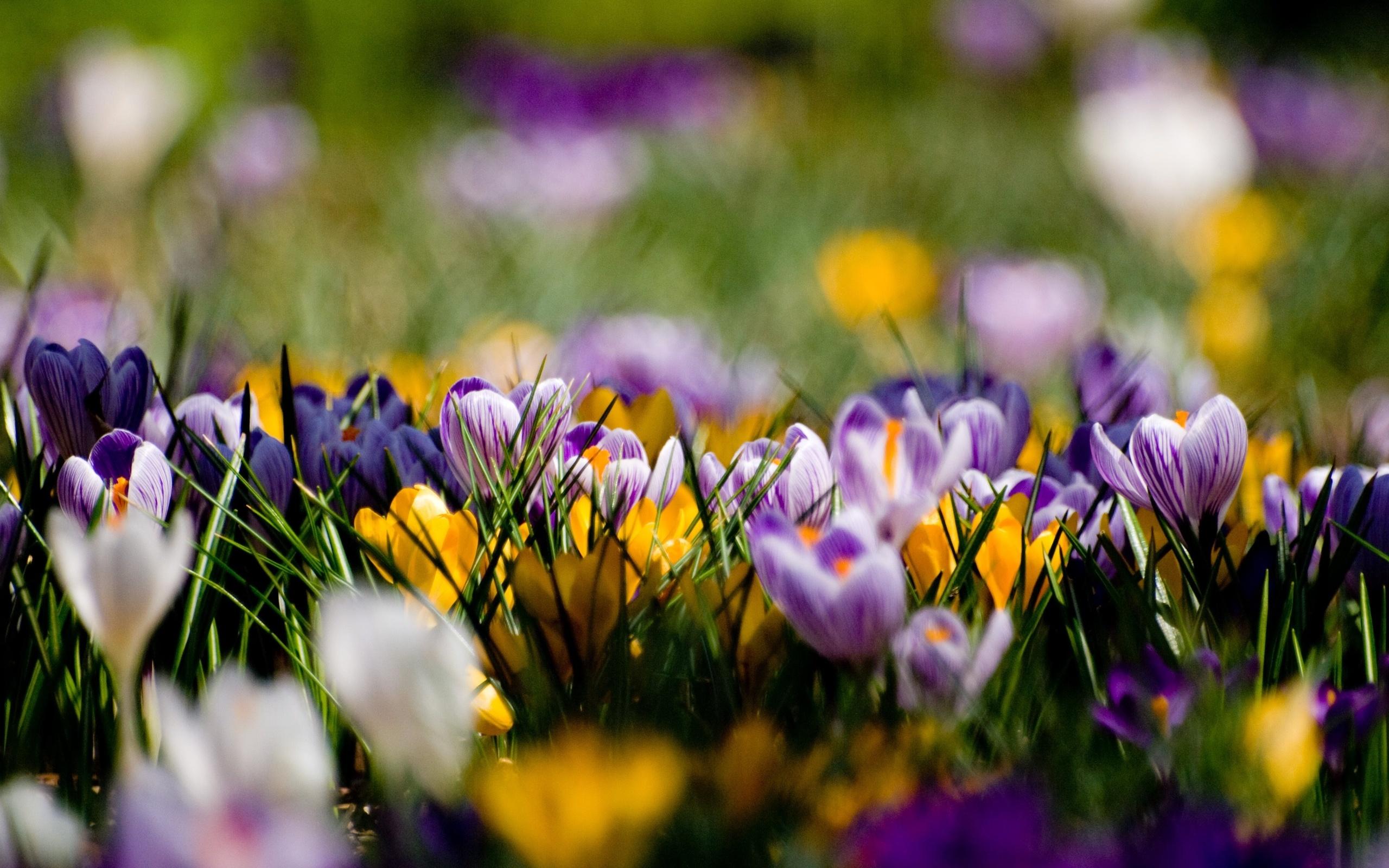 фоновые картинки цветы 1920х1080 полового