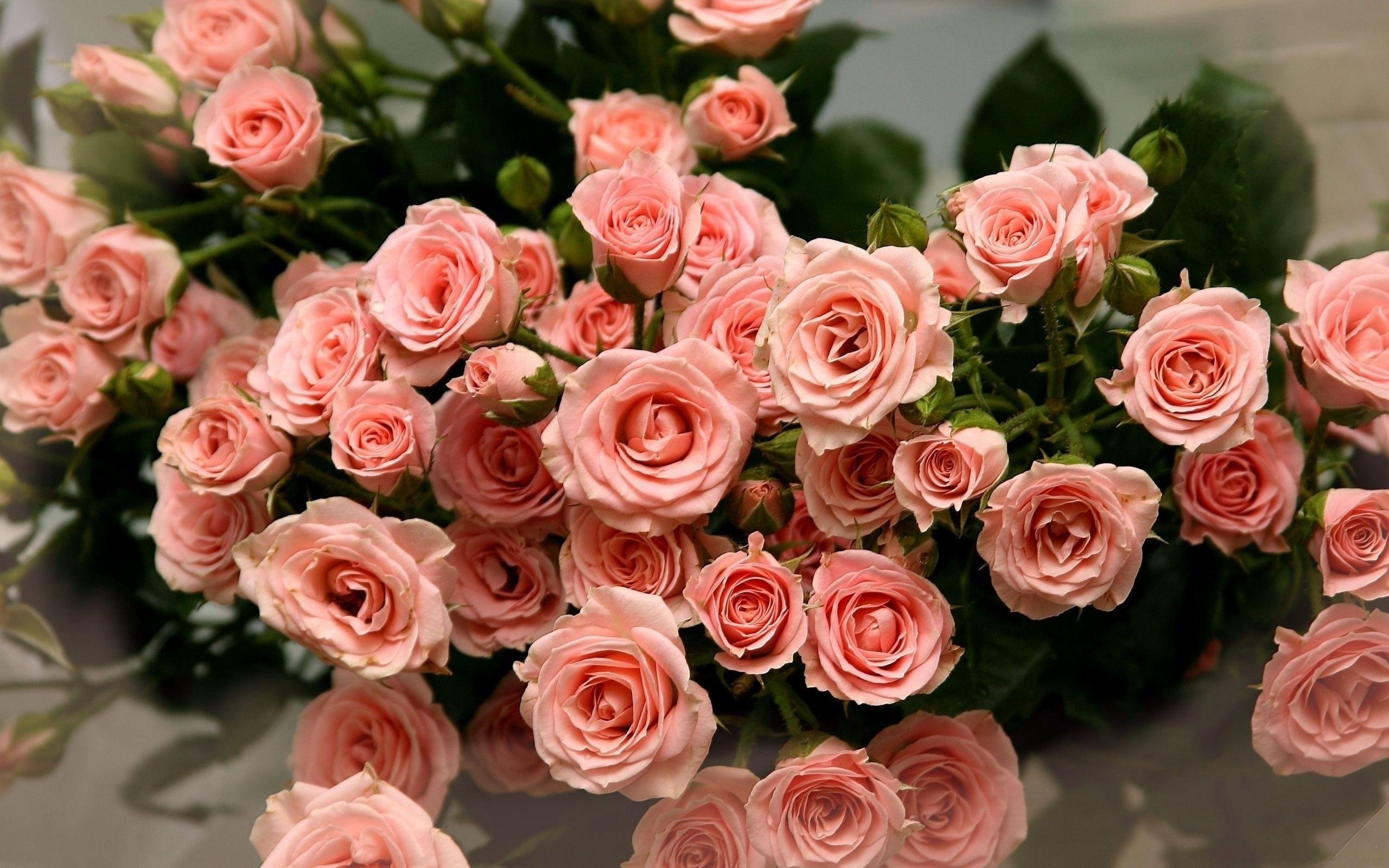 Смешные спалились, картинки с красивым букетом роз