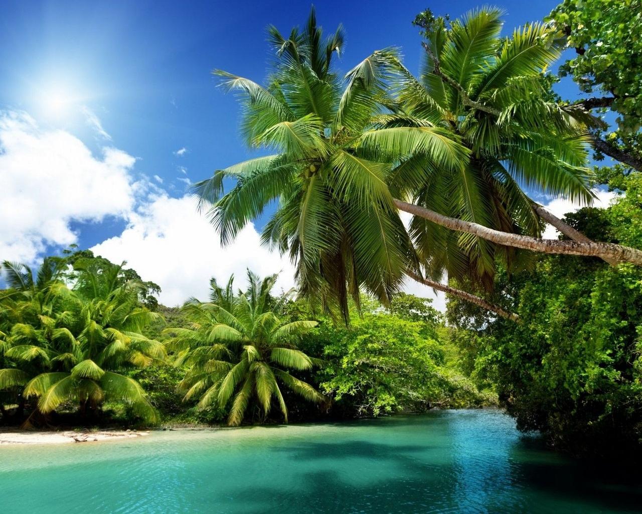 Картинка с океаном и пальмой, космосе картинки говорящие