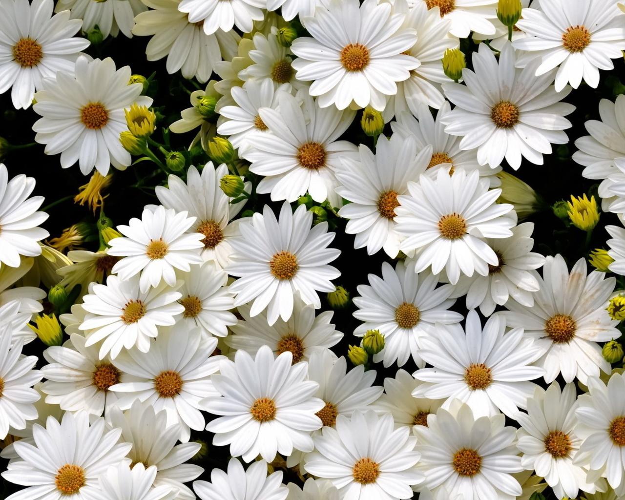 Белый цветок открытка, днем рождения