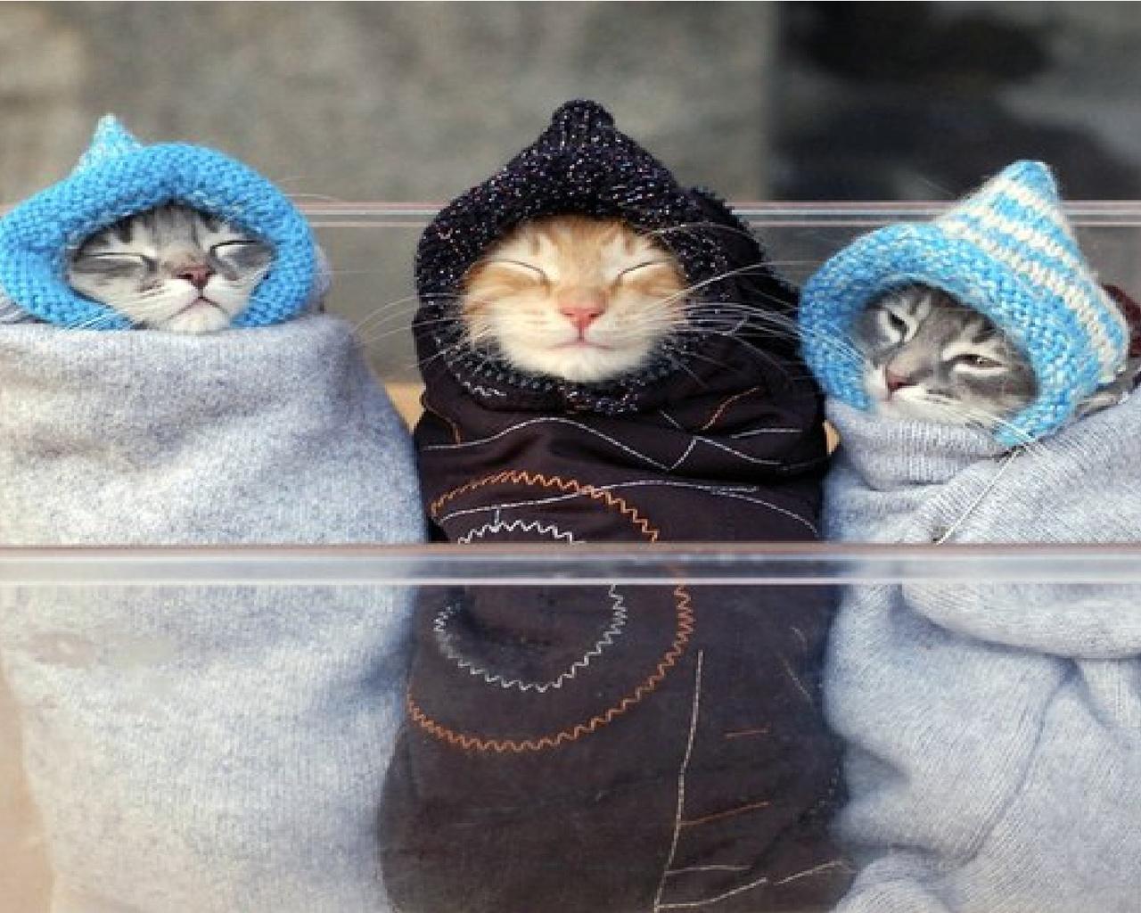 очень холодно фото приколы