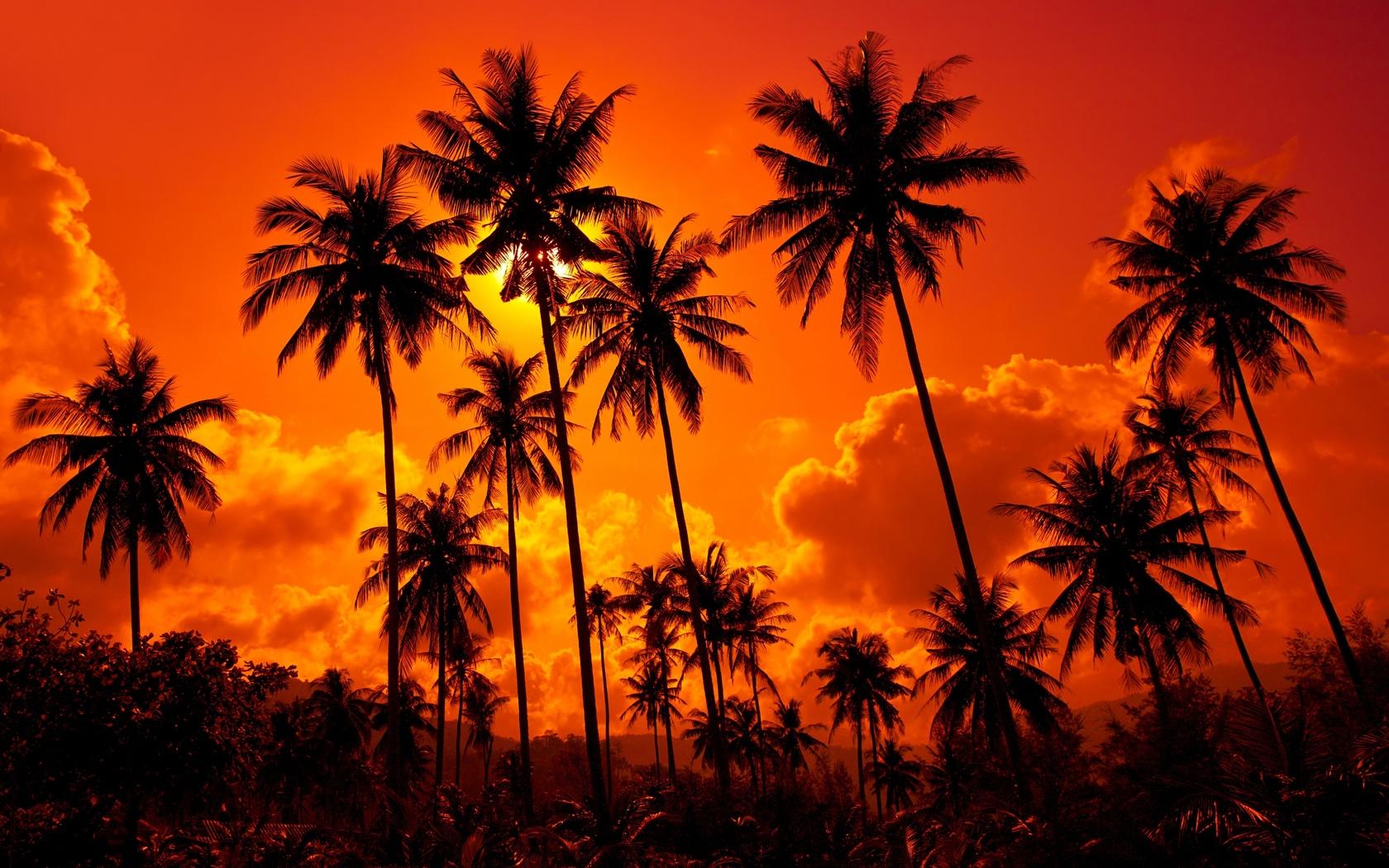 пальмы природа картинки сценарий миниатюры, которой