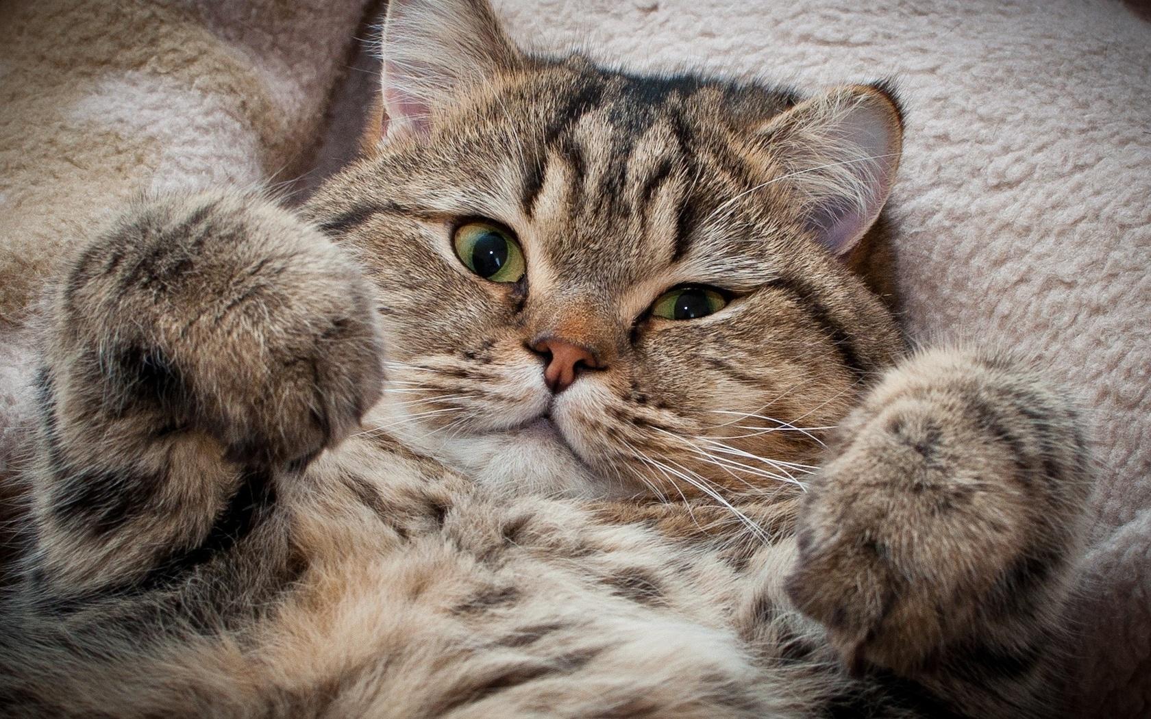 Картинки смешных котиков и милых