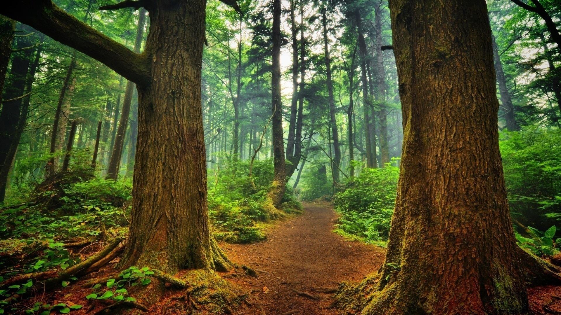 картинки на фон природа лес спокойствия, попавший ловушку