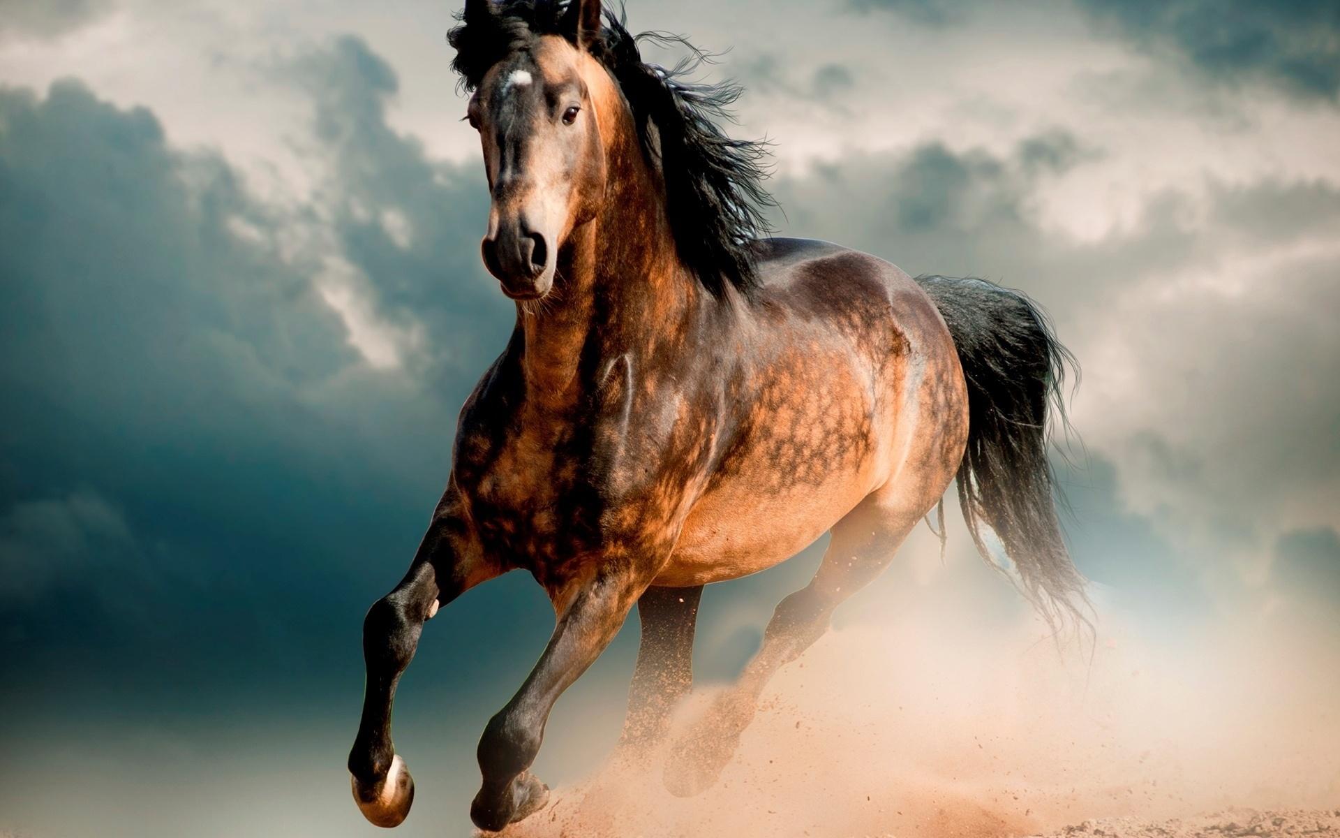 фото картинки лошади мустанг услугам