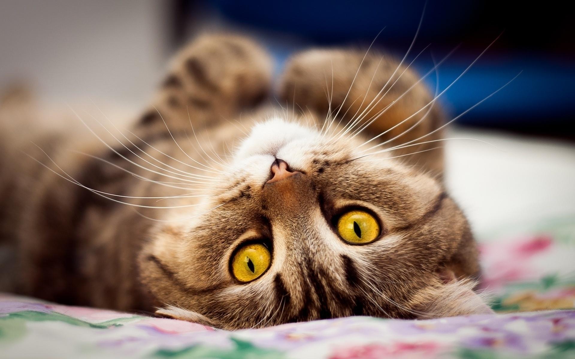Прикольные коты большие картинки, спасибо поздравление фото