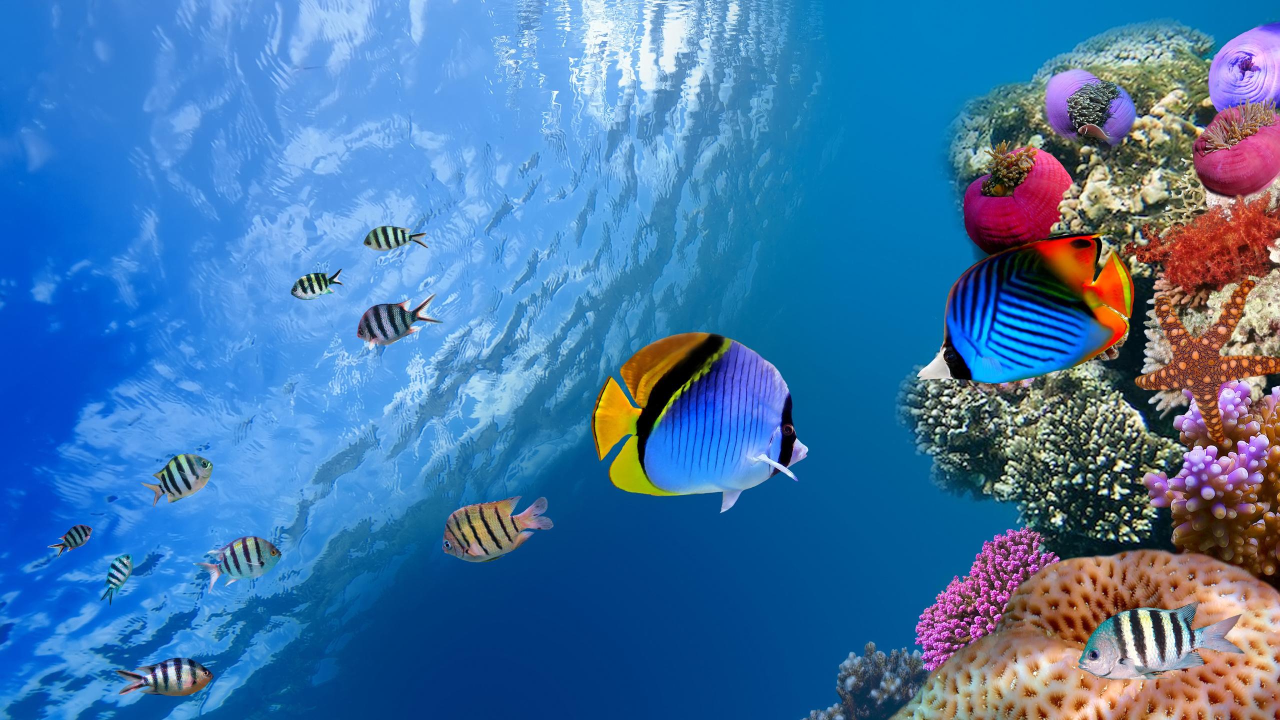 фоновые картинки с рыбками личному составу органов