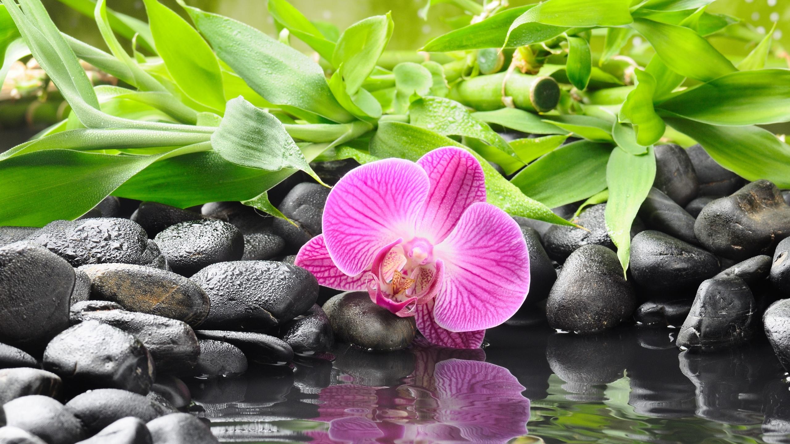 Красивые картинки цветов и природы