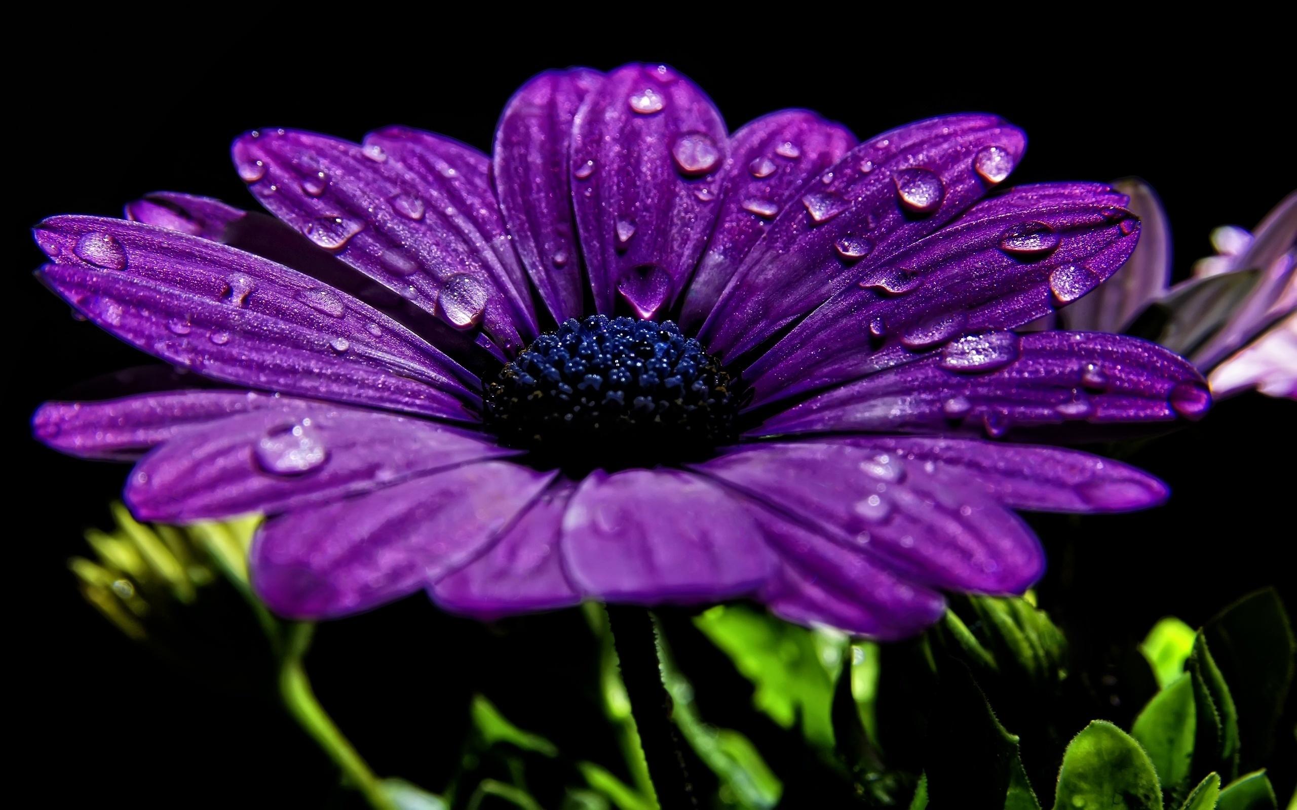 Цветы картинки на заставку в телефон