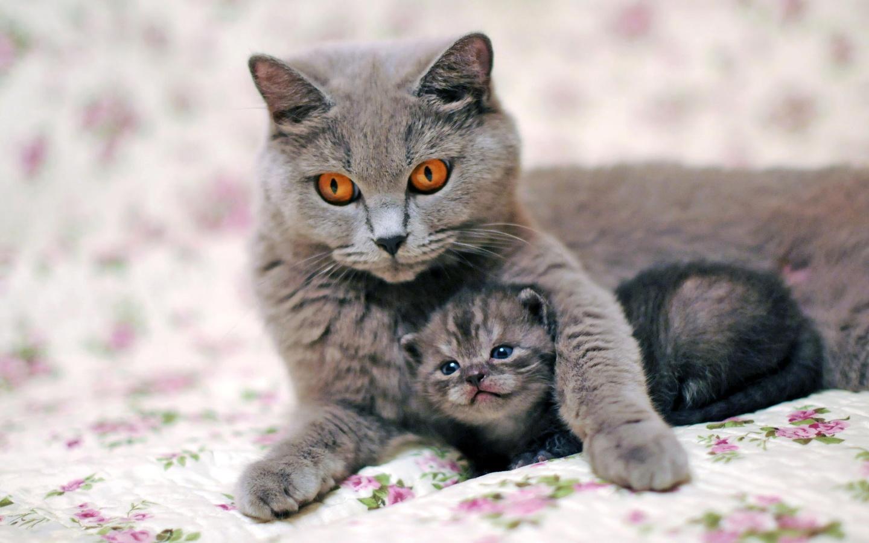Марта своими, картинка с кошкой и котятами