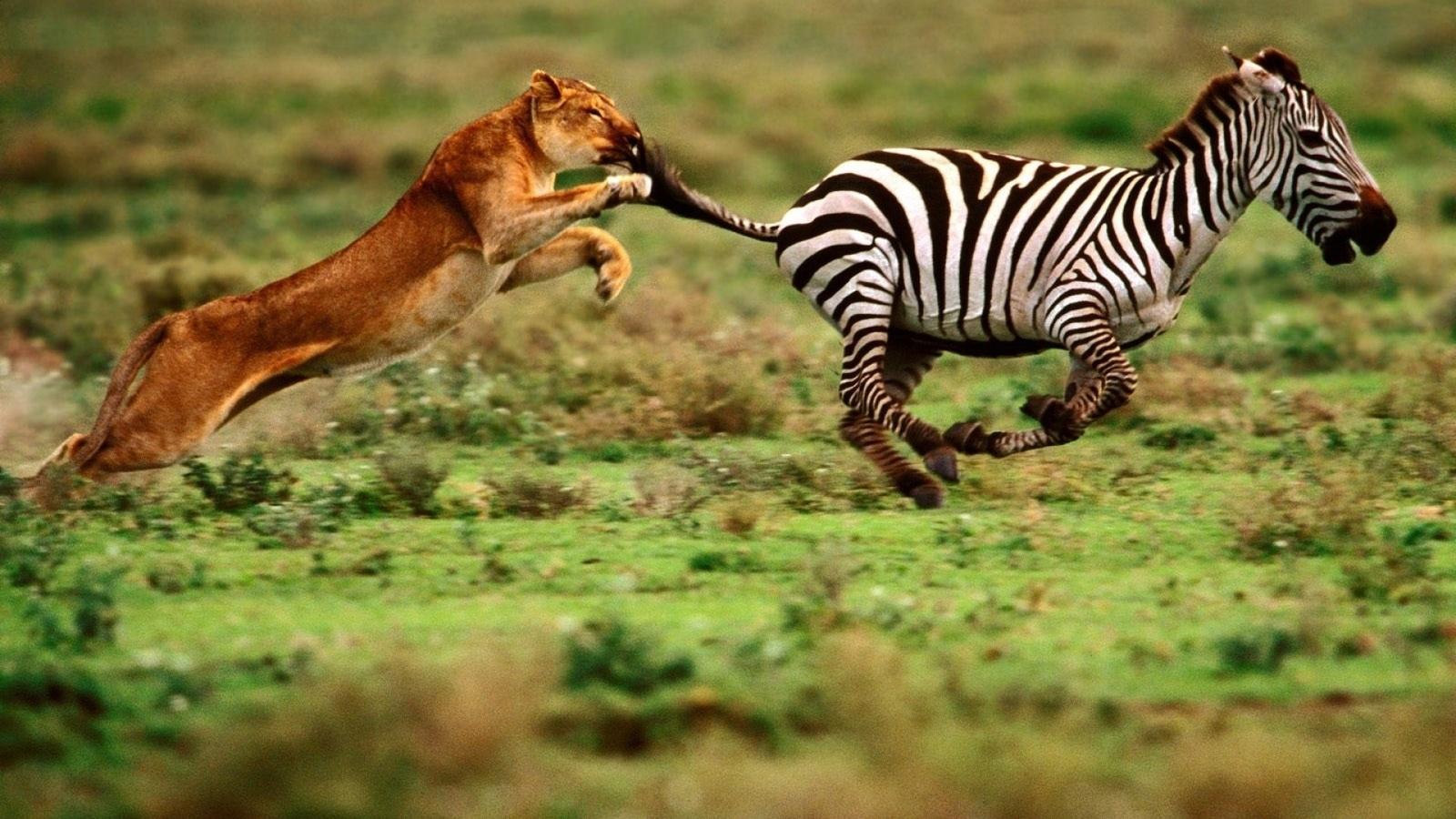 Взаимоотношения животных в природе картинки