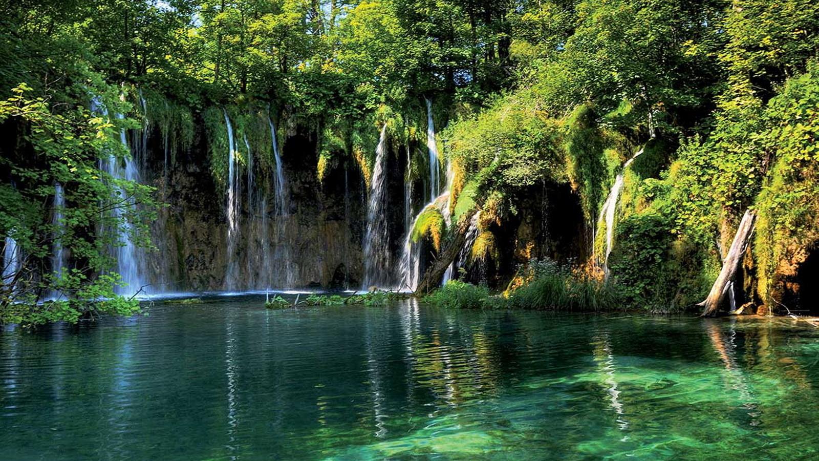 сестра картинки леса с водопадом магазины