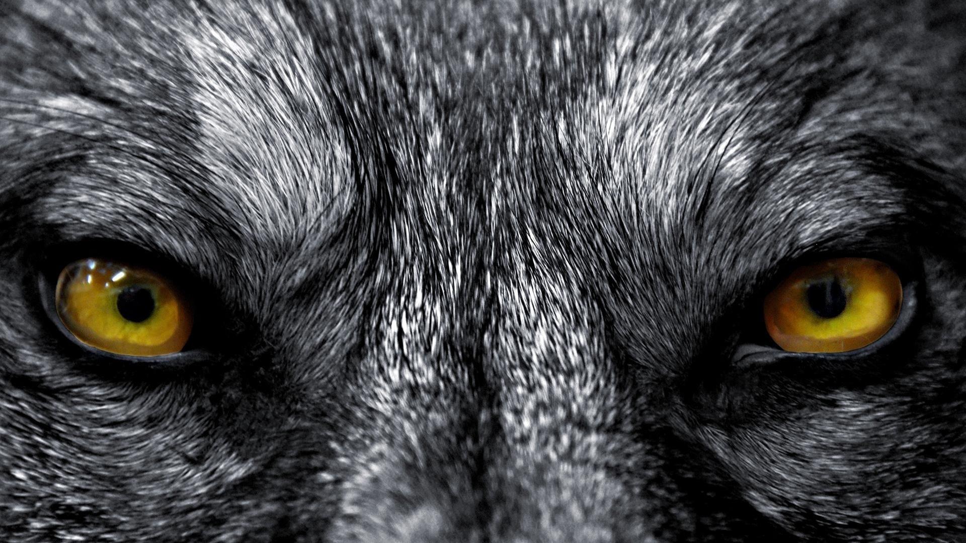 Картинки с волчьим глазом
