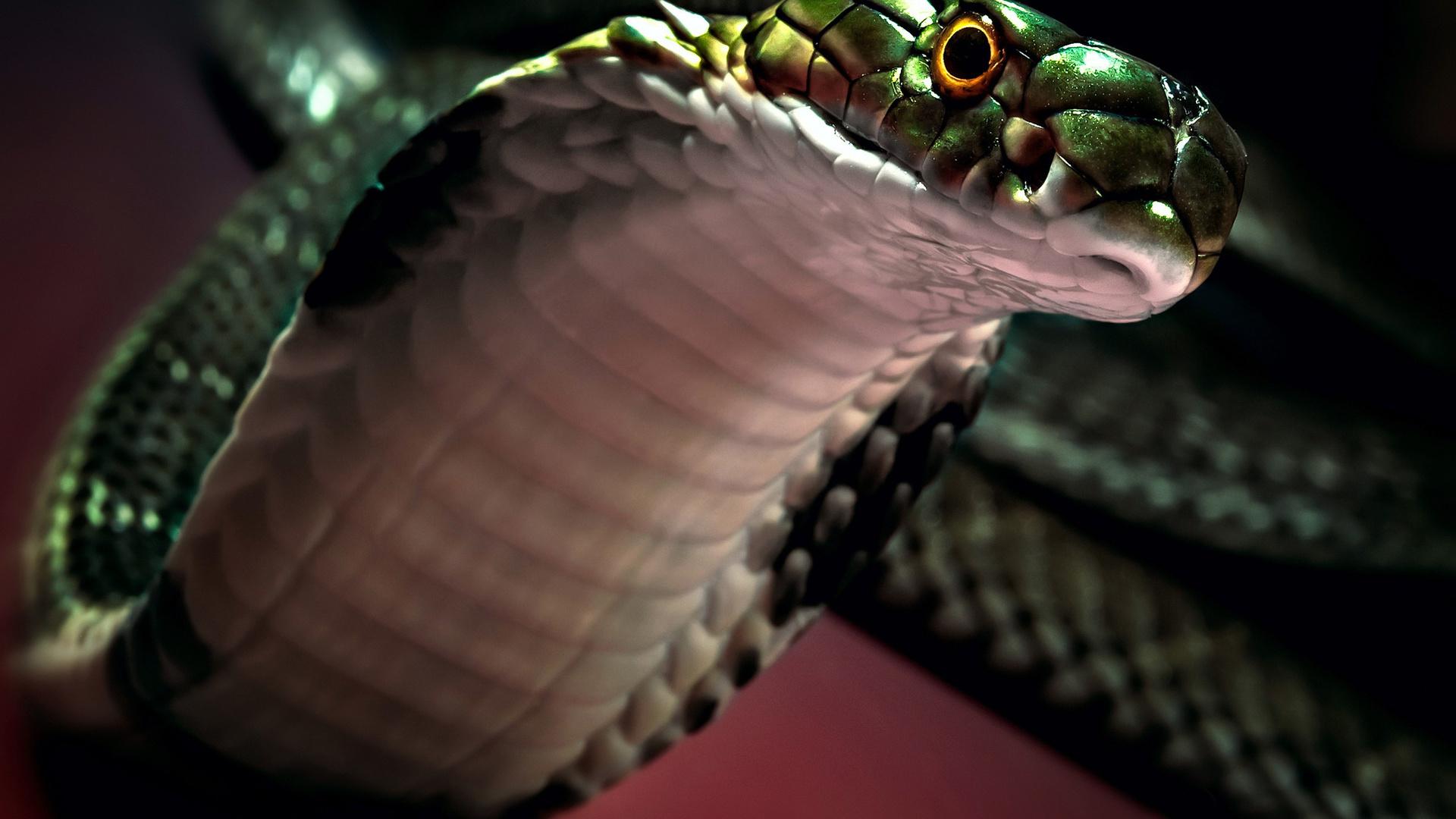 картинки змей для рабочего стола на весь экран значит