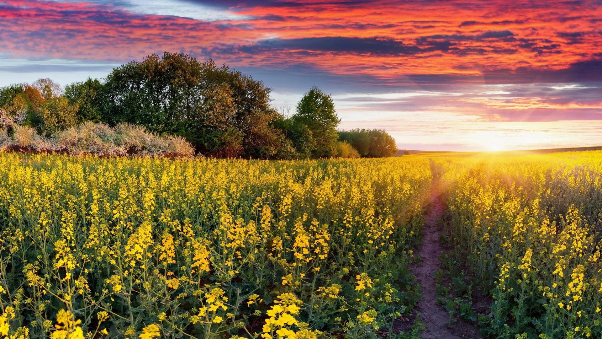 задача картинка природа украины летом это
