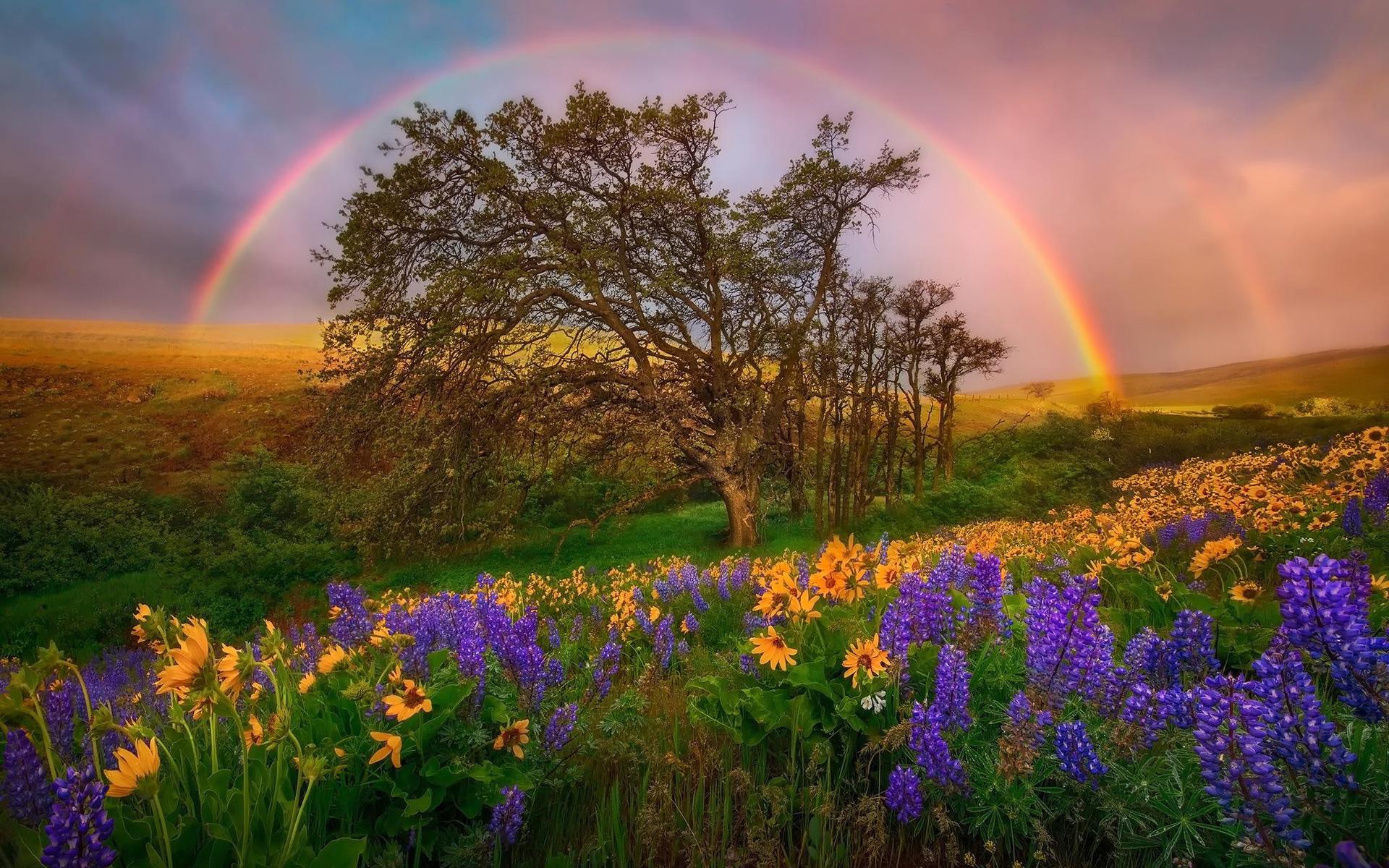 если семья фото природа цветы радугой пришелся душе монохромный
