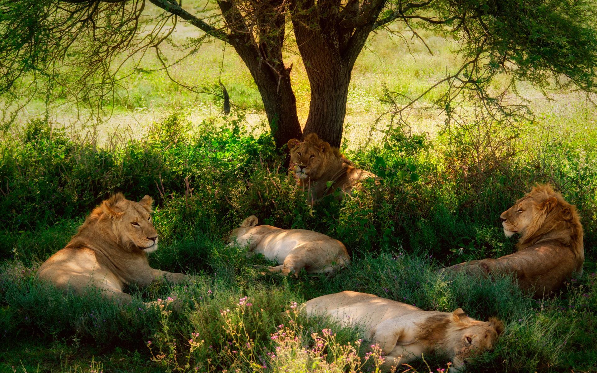 Картинки со зверями на природе