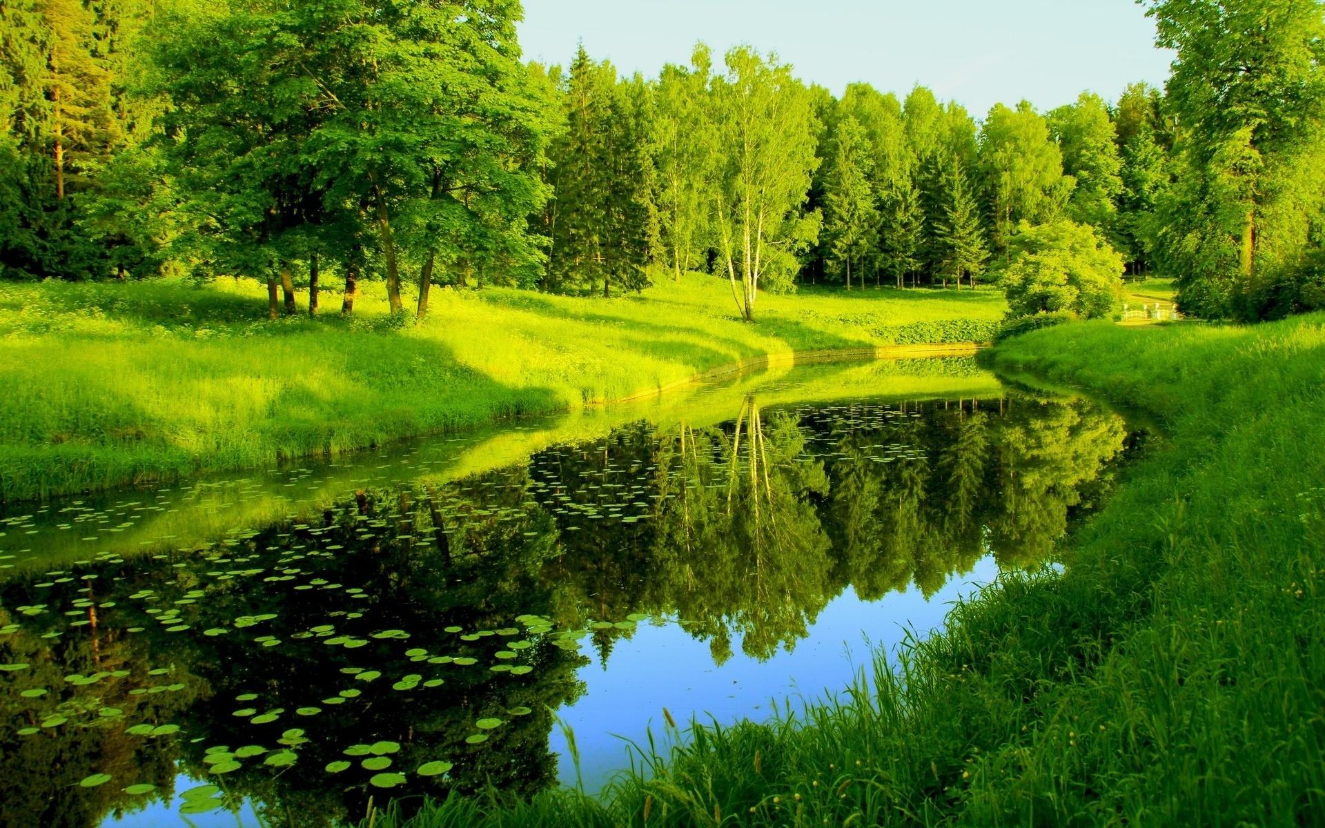 картинки речка лес лето ежики
