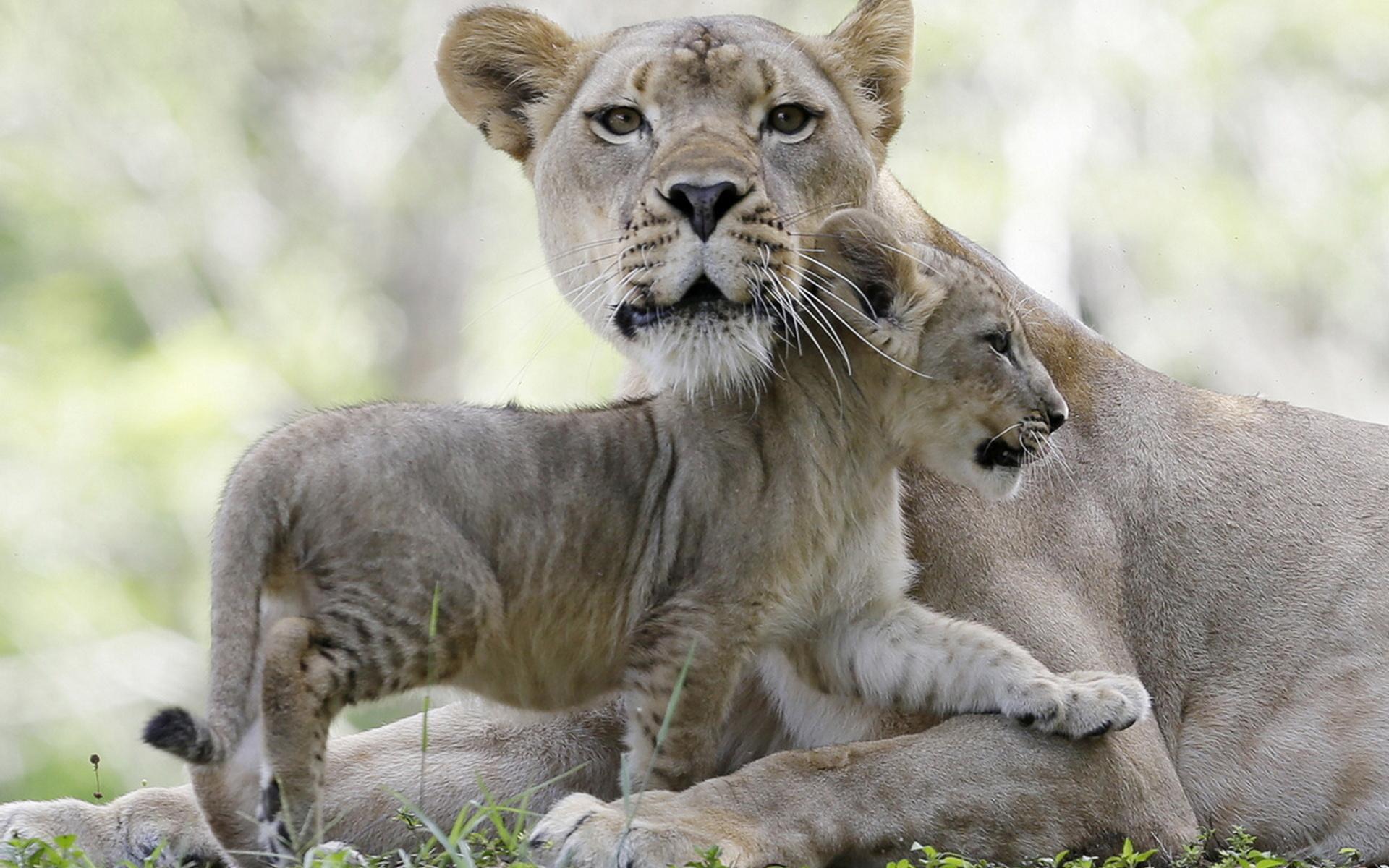 Животный мир в картинках как матери защищают своих детенышей
