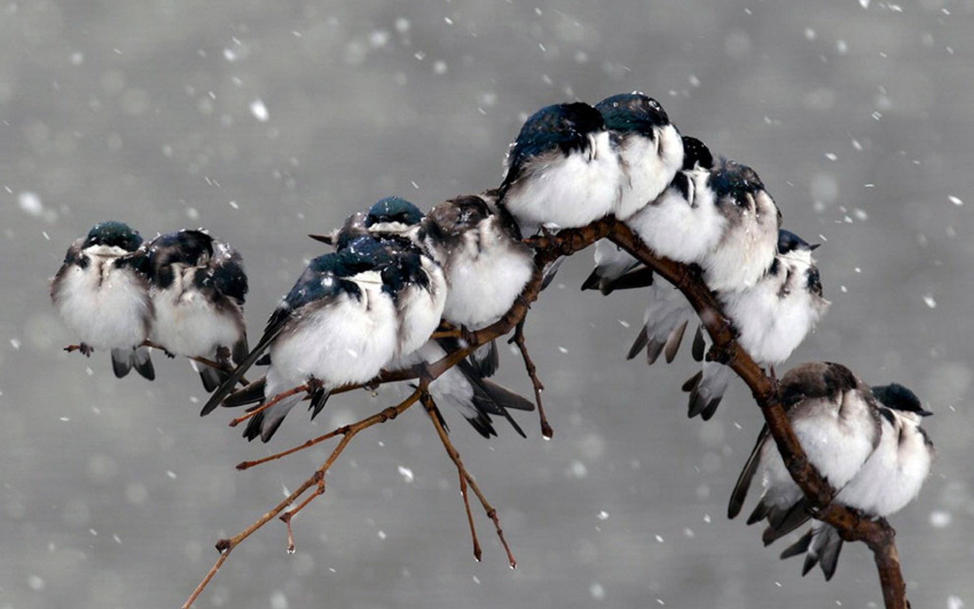 было много, картинки красивые прикольные конец зимы опубликовал свежее фото