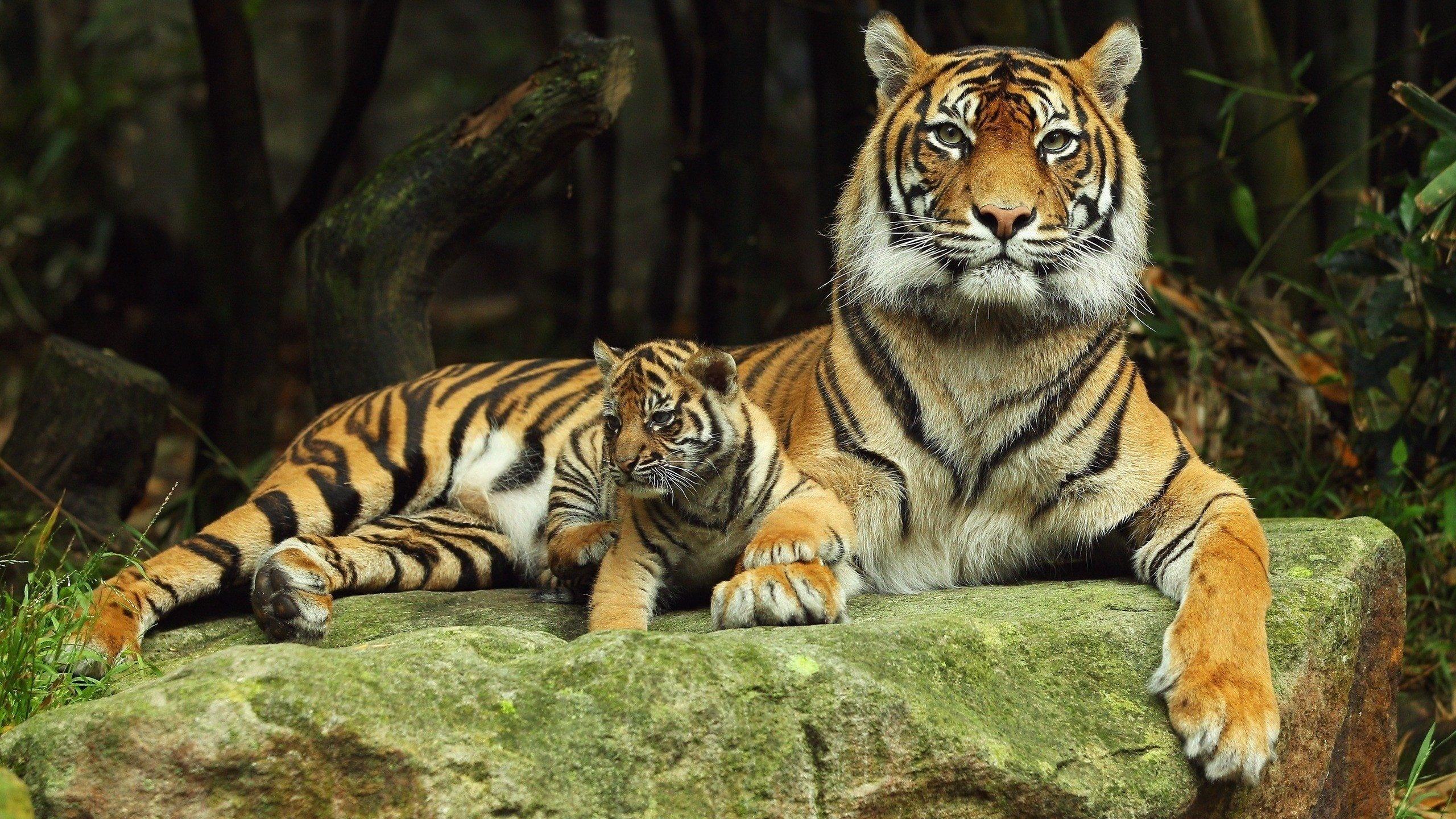 услышать обои на телефон тигрята фотообои эти