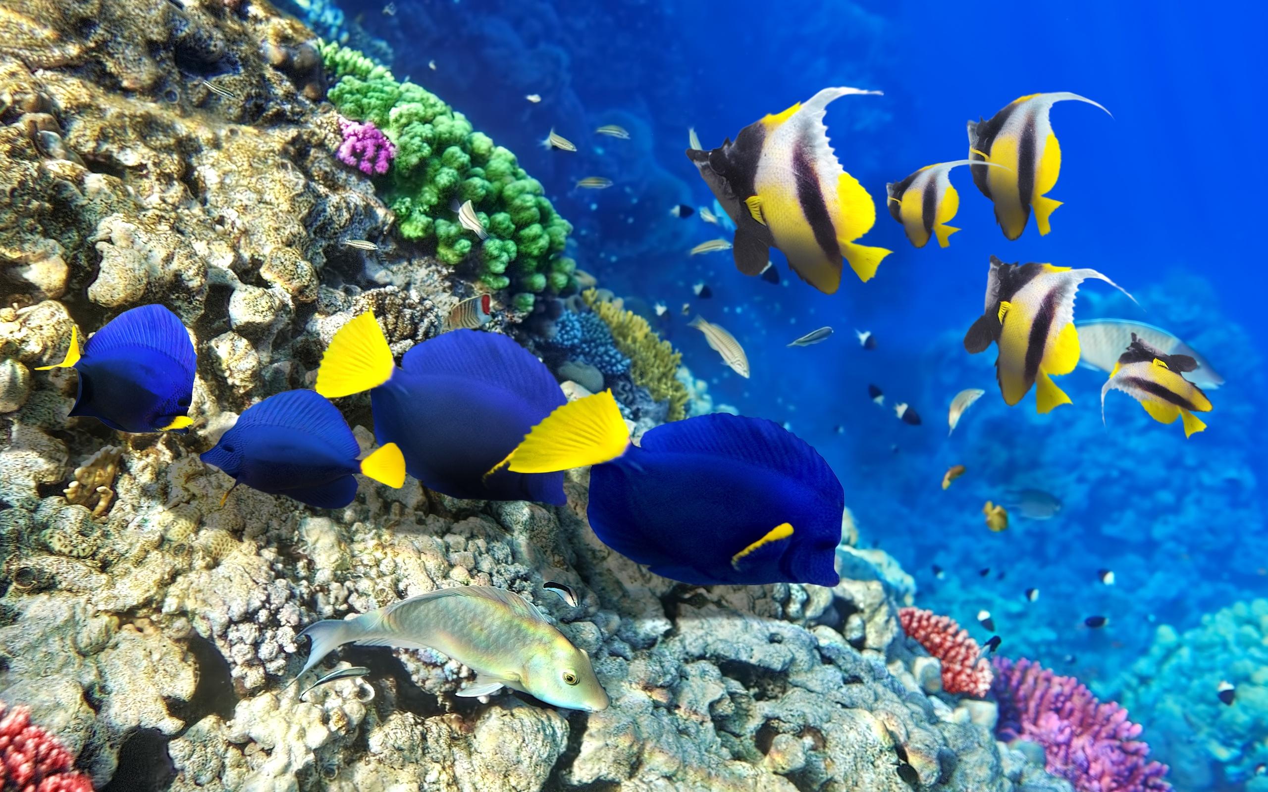 картинки дна океана с рыбками старинных