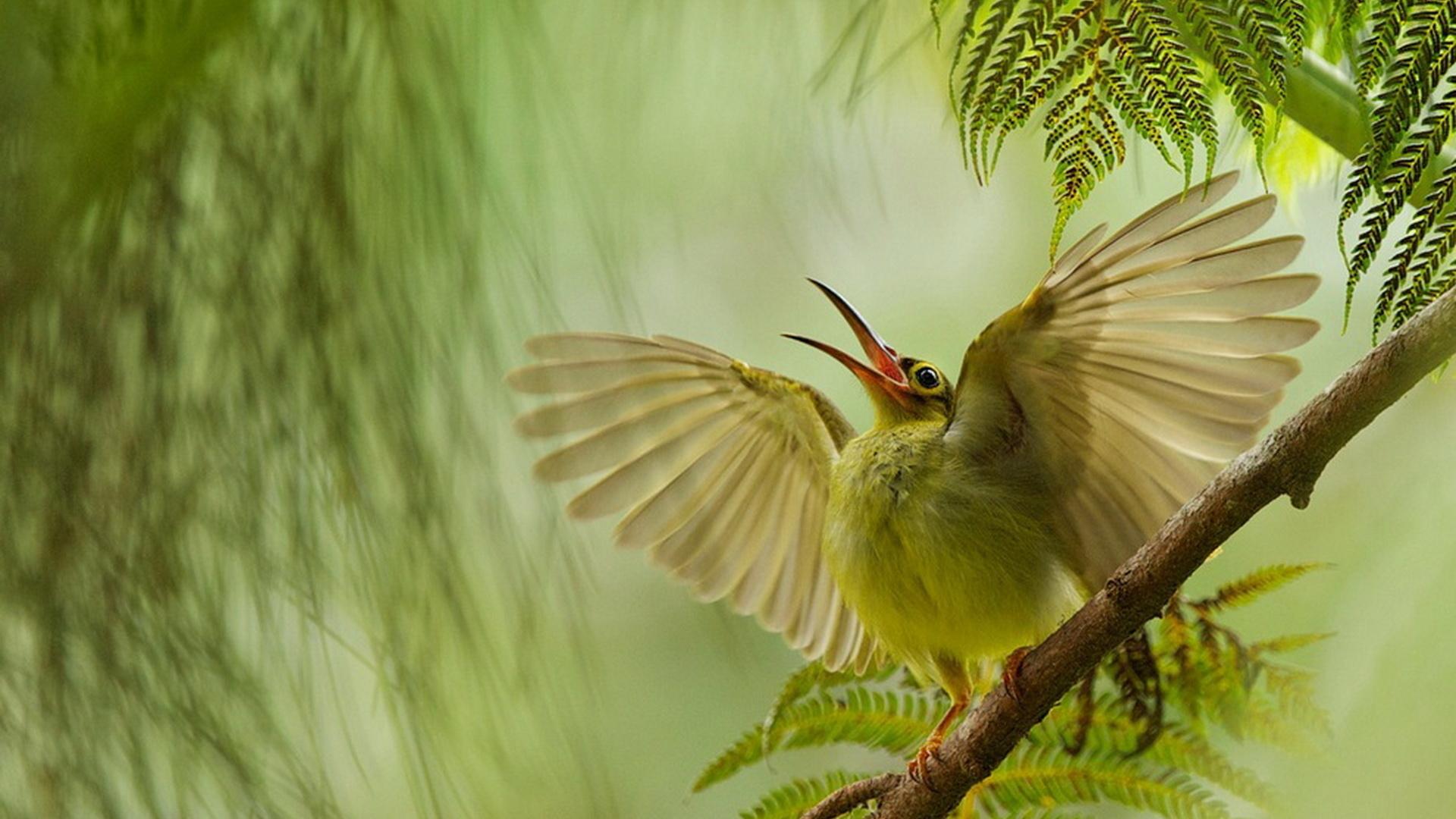 картинки с райскими птичками главные роли