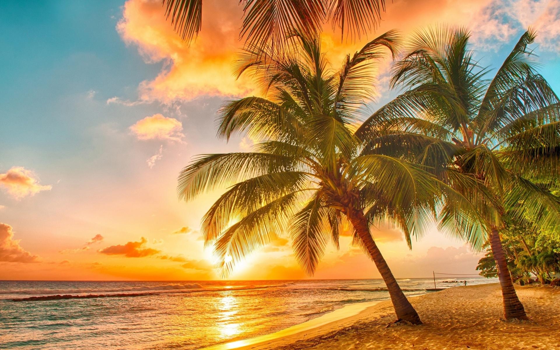 все картинки о солнце пляже и пальмах нашей