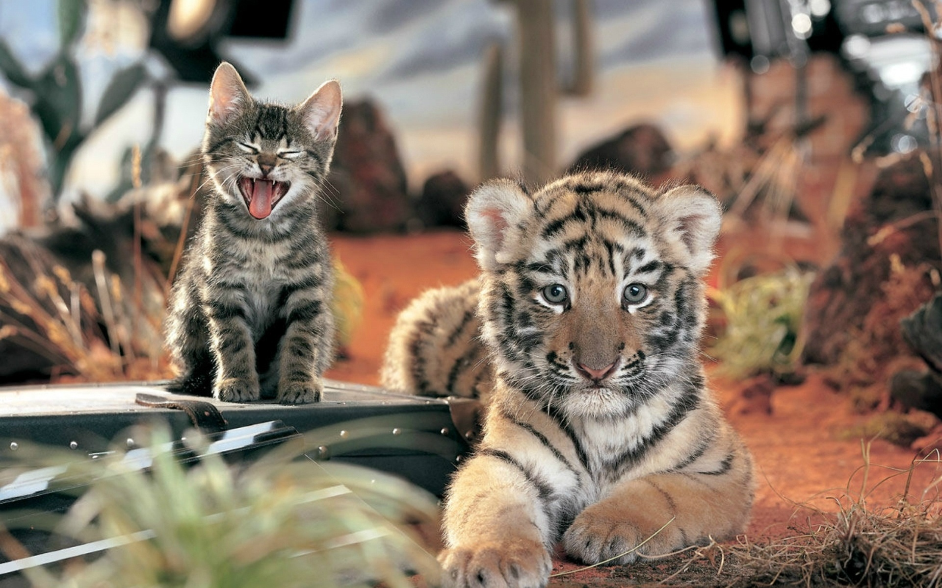 картинки животных в мой мир